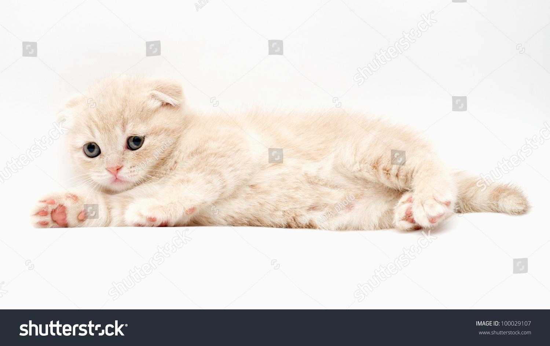 cat rescue oregon