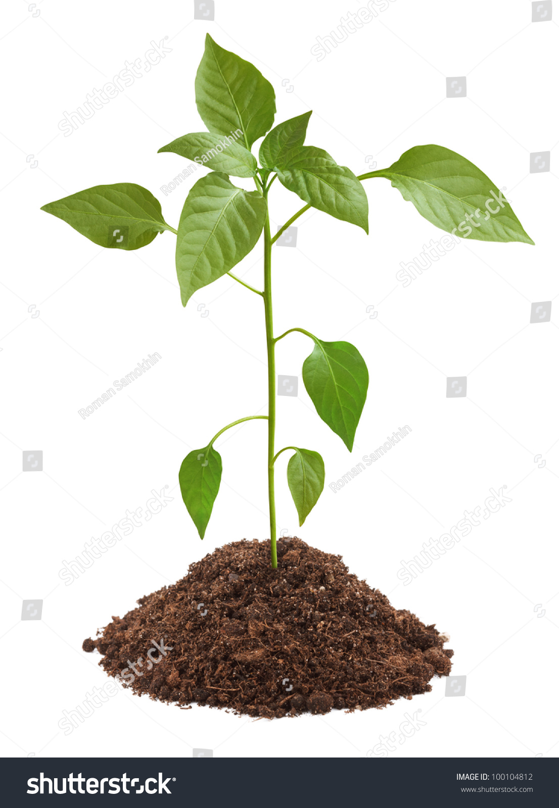 Young green plant soil isolated on stock photo 100104812 for Soil young s modulus