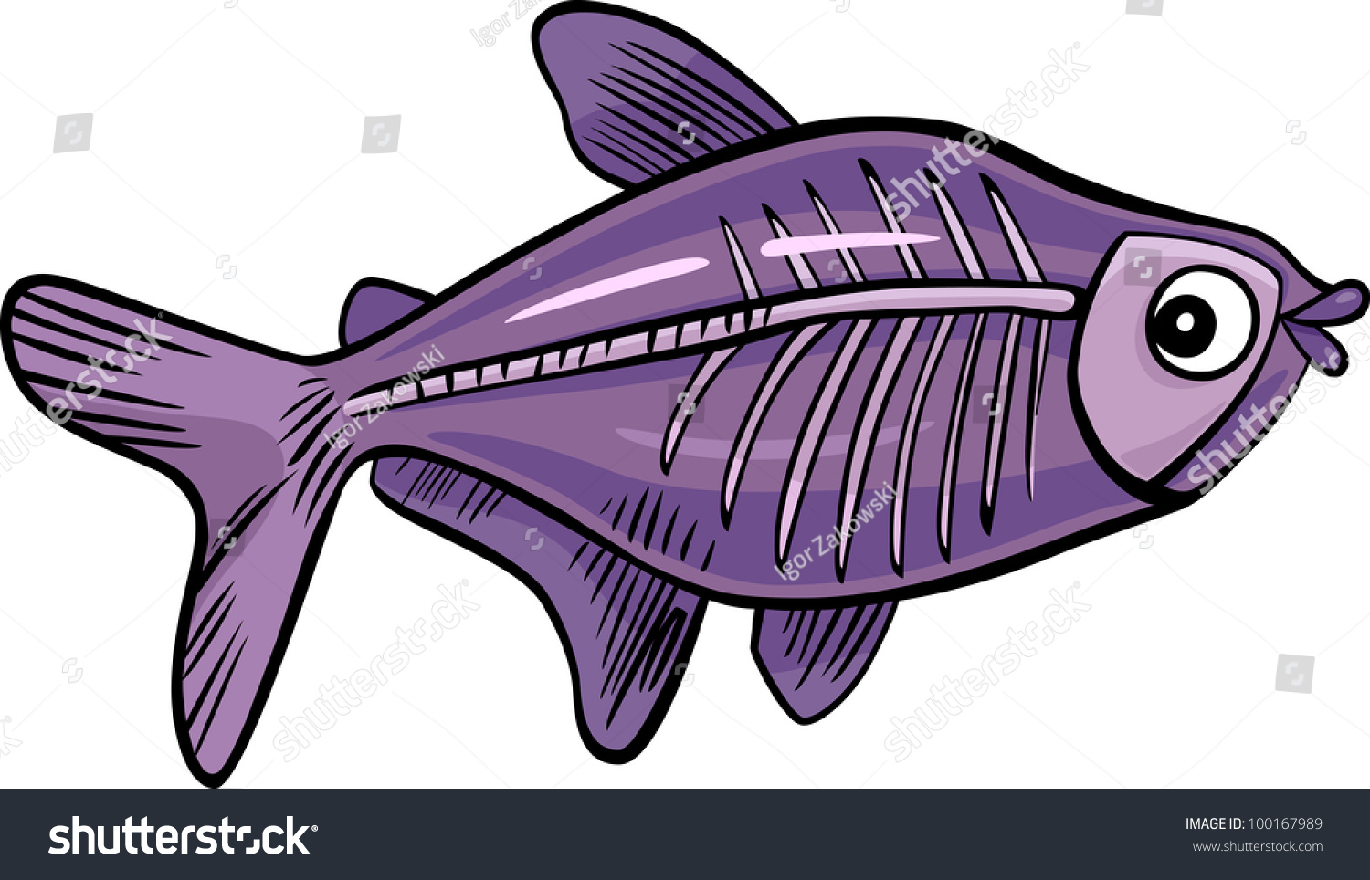 Cartoon illustration xray fish stock vector 100167989 for X ray fish