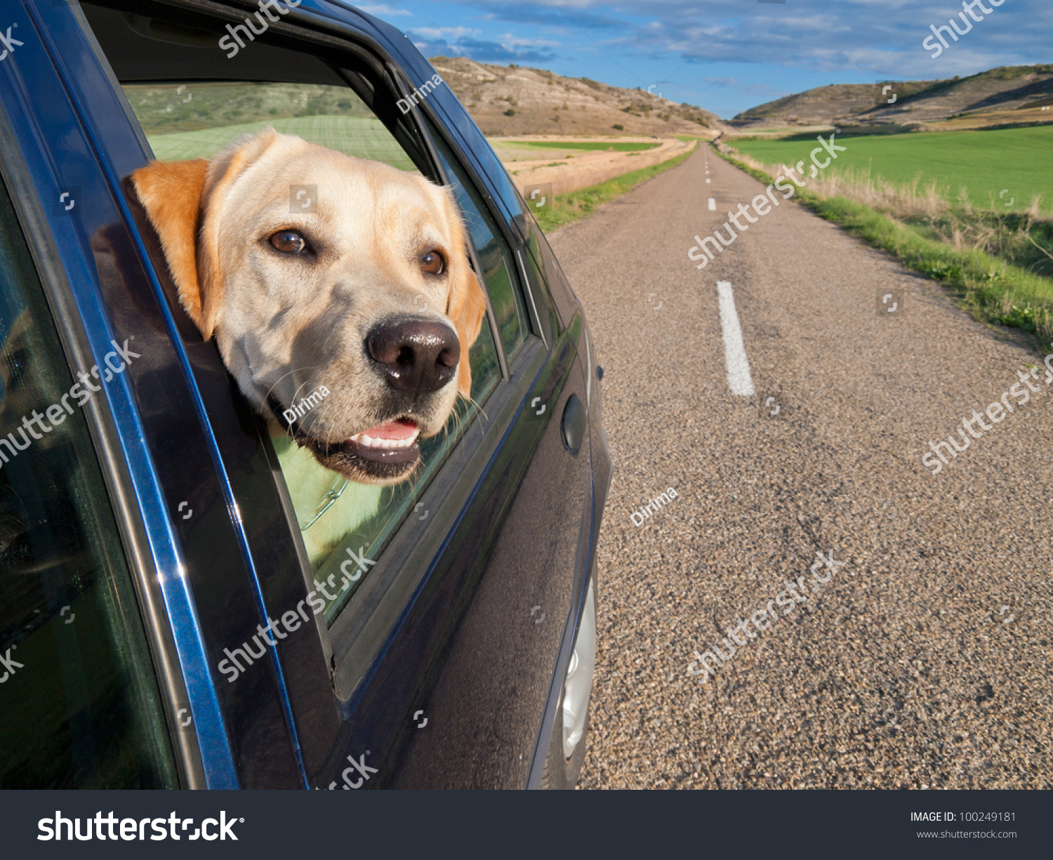 Dog car window travel concept pet stock photo 100249181 shutterstock - Dogs for small spaces concept ...