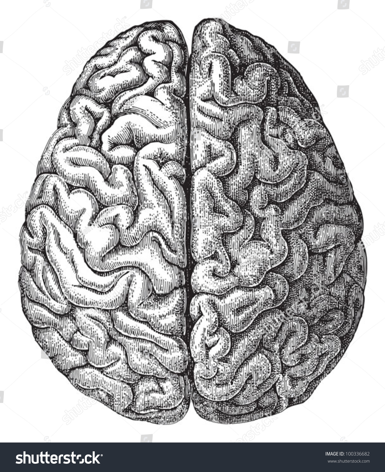 Human brain / vintage illustration from Meyers Konversations-Lexikon ...