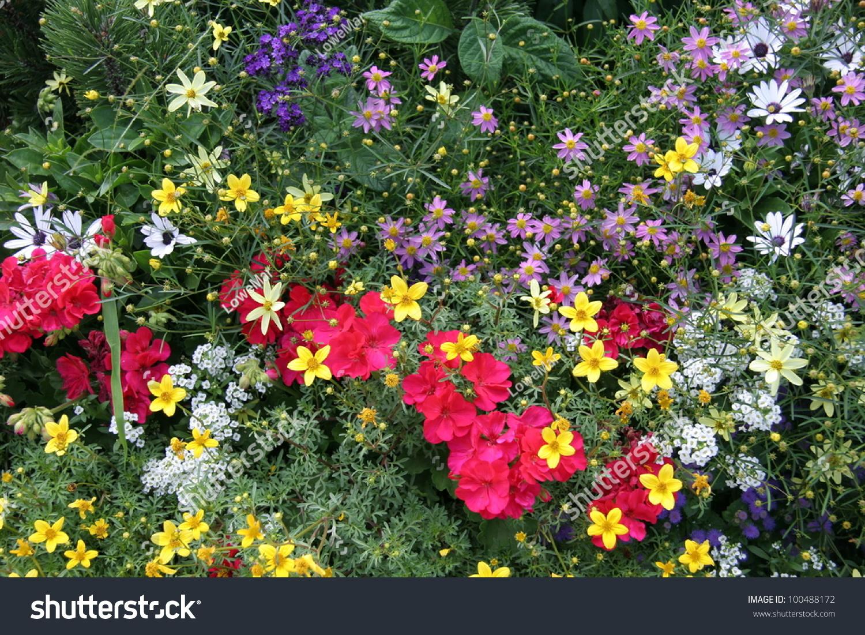 Spring Flower Garden Various Types Flowers Stock Photo Edit Now