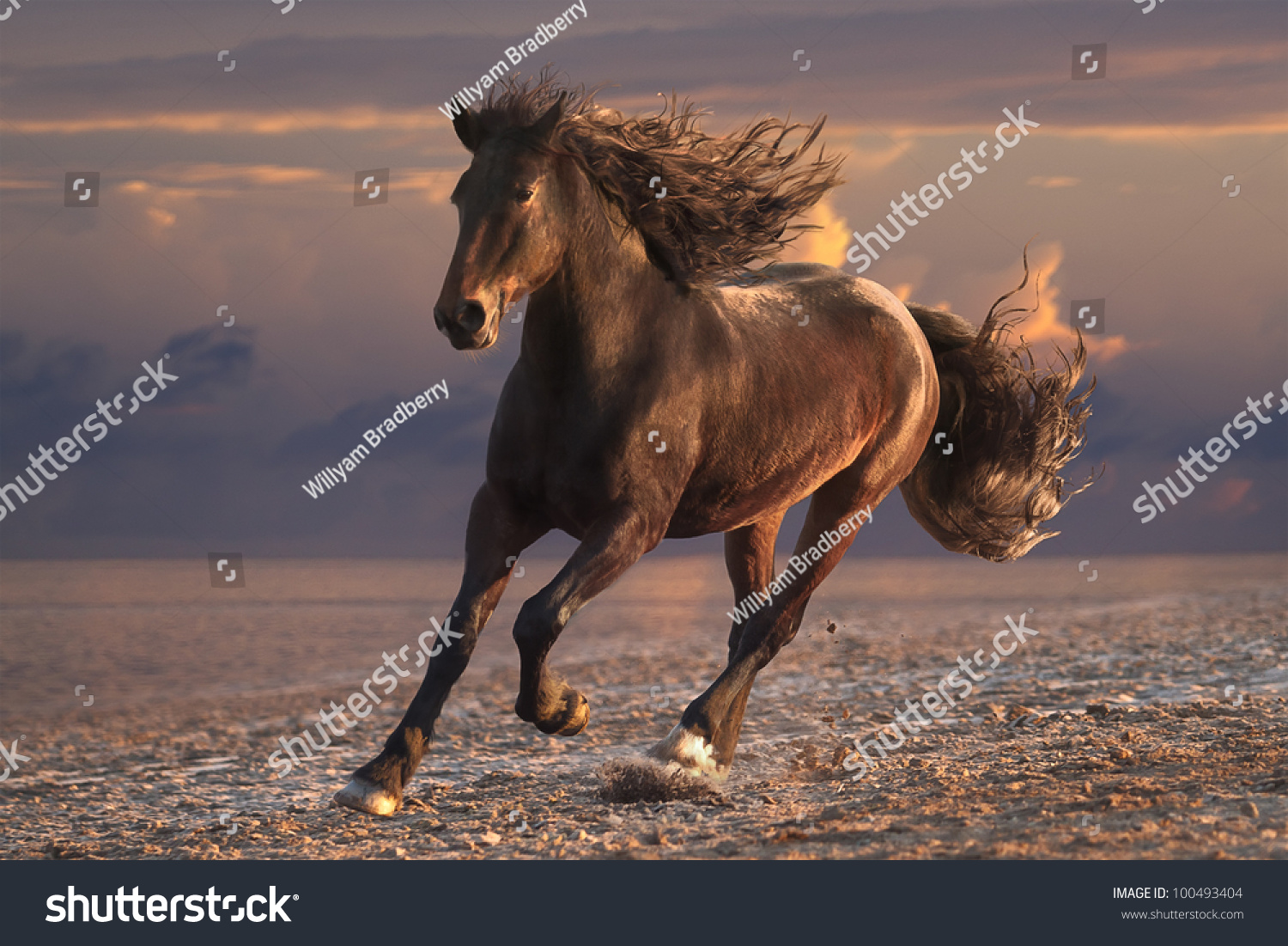 Running Horse Streamed Mane On Sunset Stock Photo ...