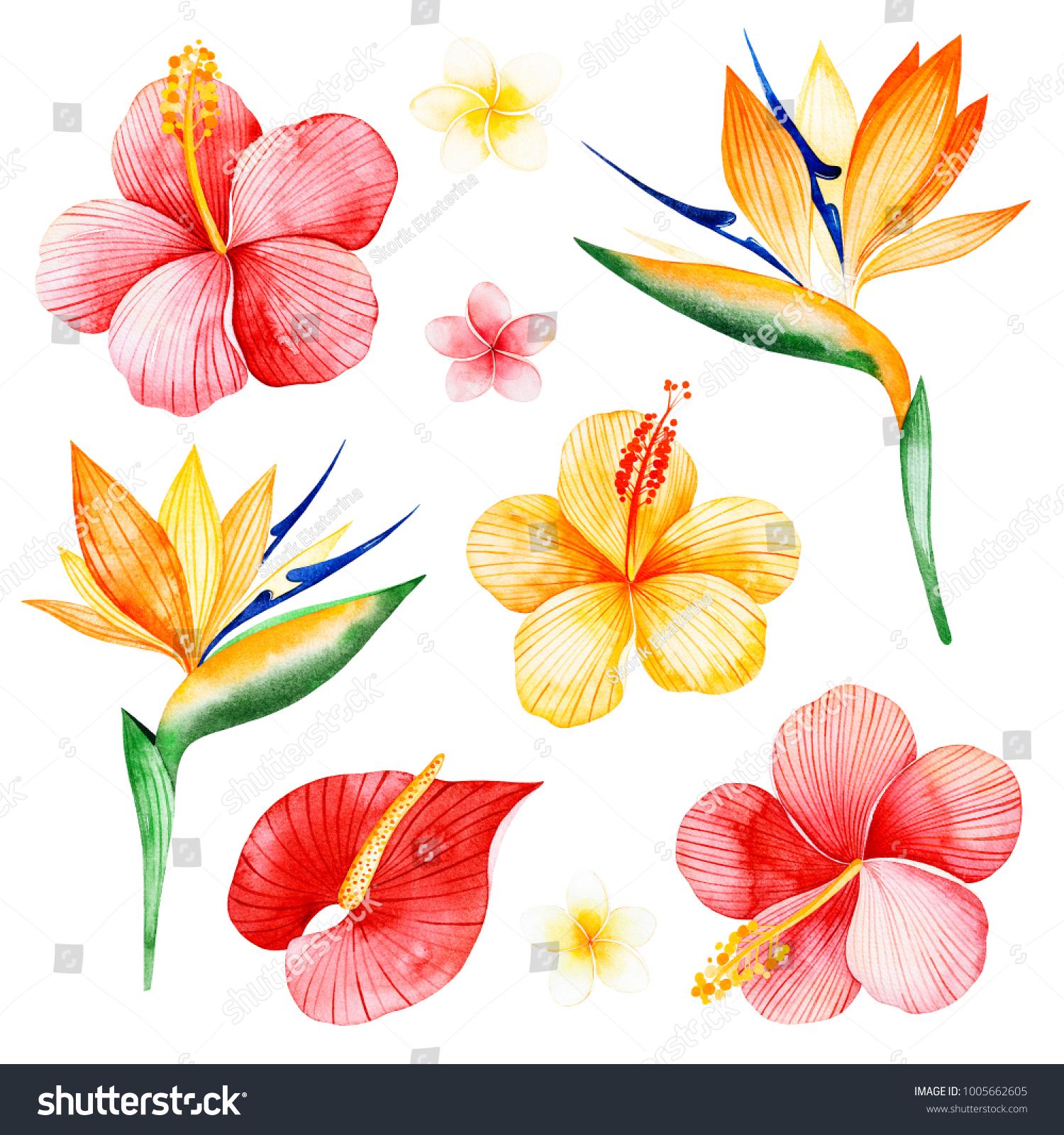 Watercolor Tropical Flowers Collection Texture Plumeria Hibiscusbird ...