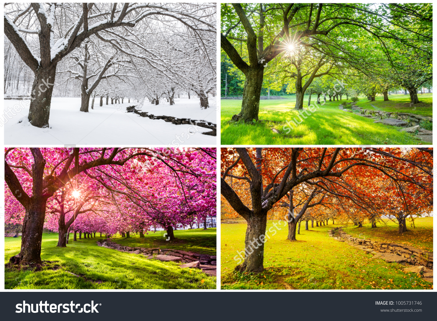 Four seasons with japanese cherry trees in Hurd Park, Dover, New Jersey #1005731746
