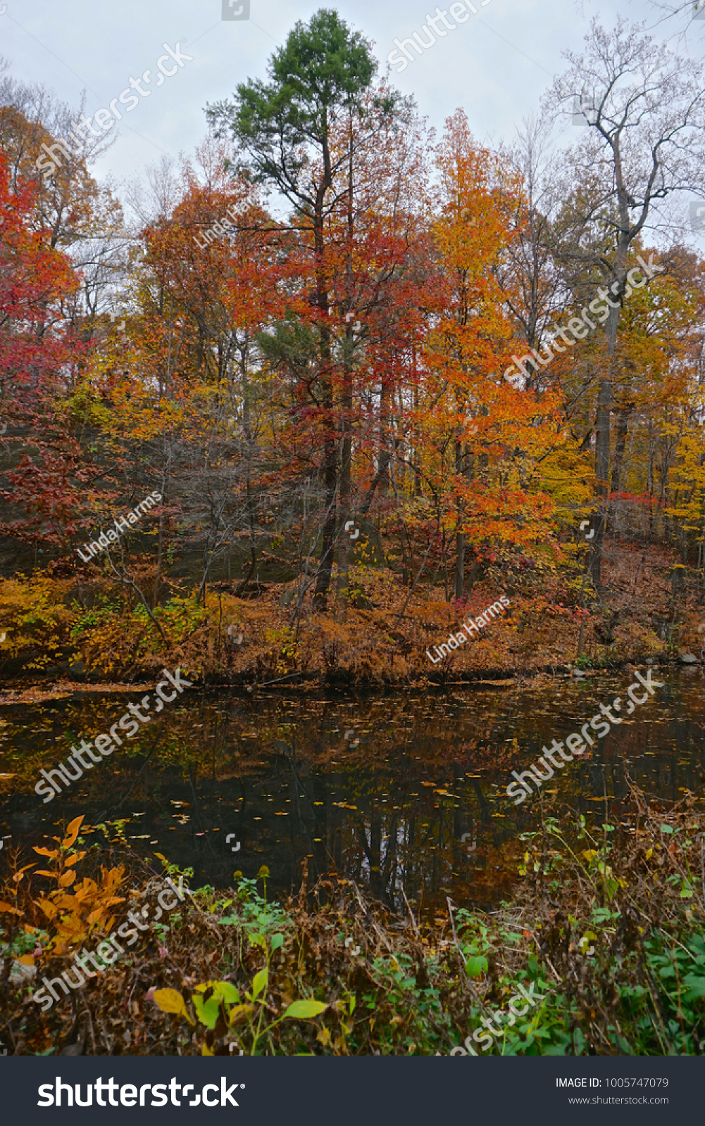 The Bronx, New York, USA: Autumn forest scene with a stream at the ...