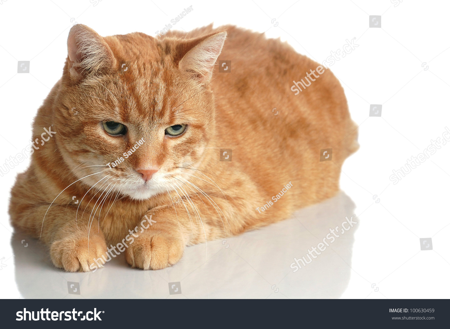 my cat has a cold what can i do