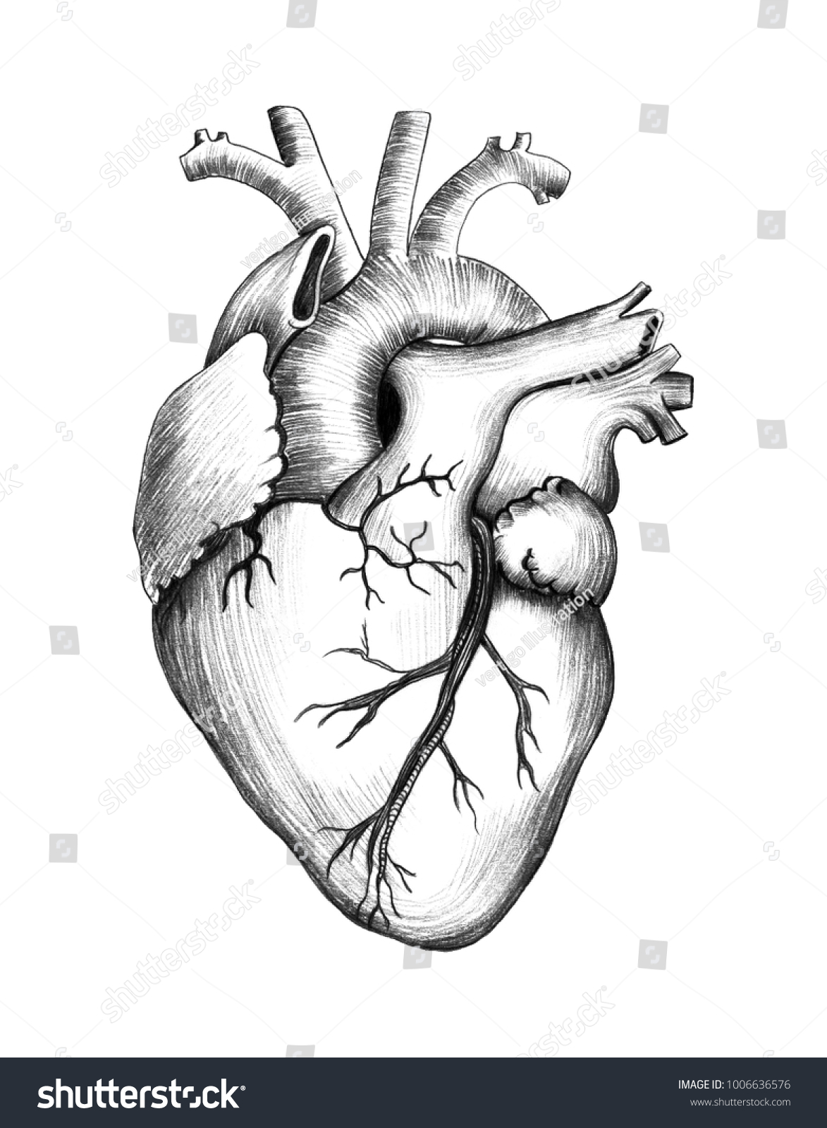 Pencil drawing of heart realistic illustration