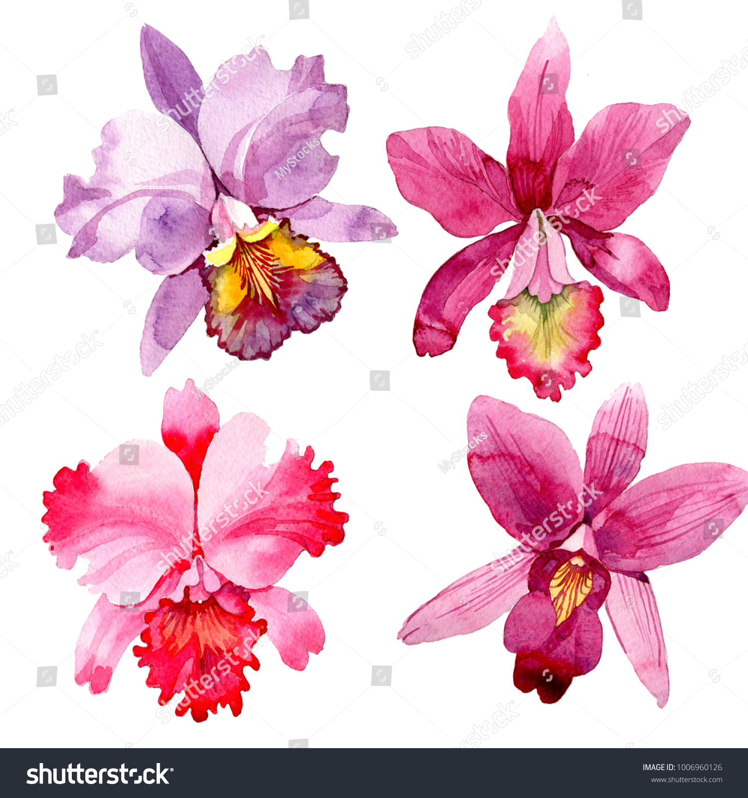 Wildflower Pink Orchid Flower In A Watercolor Style Isolated Full