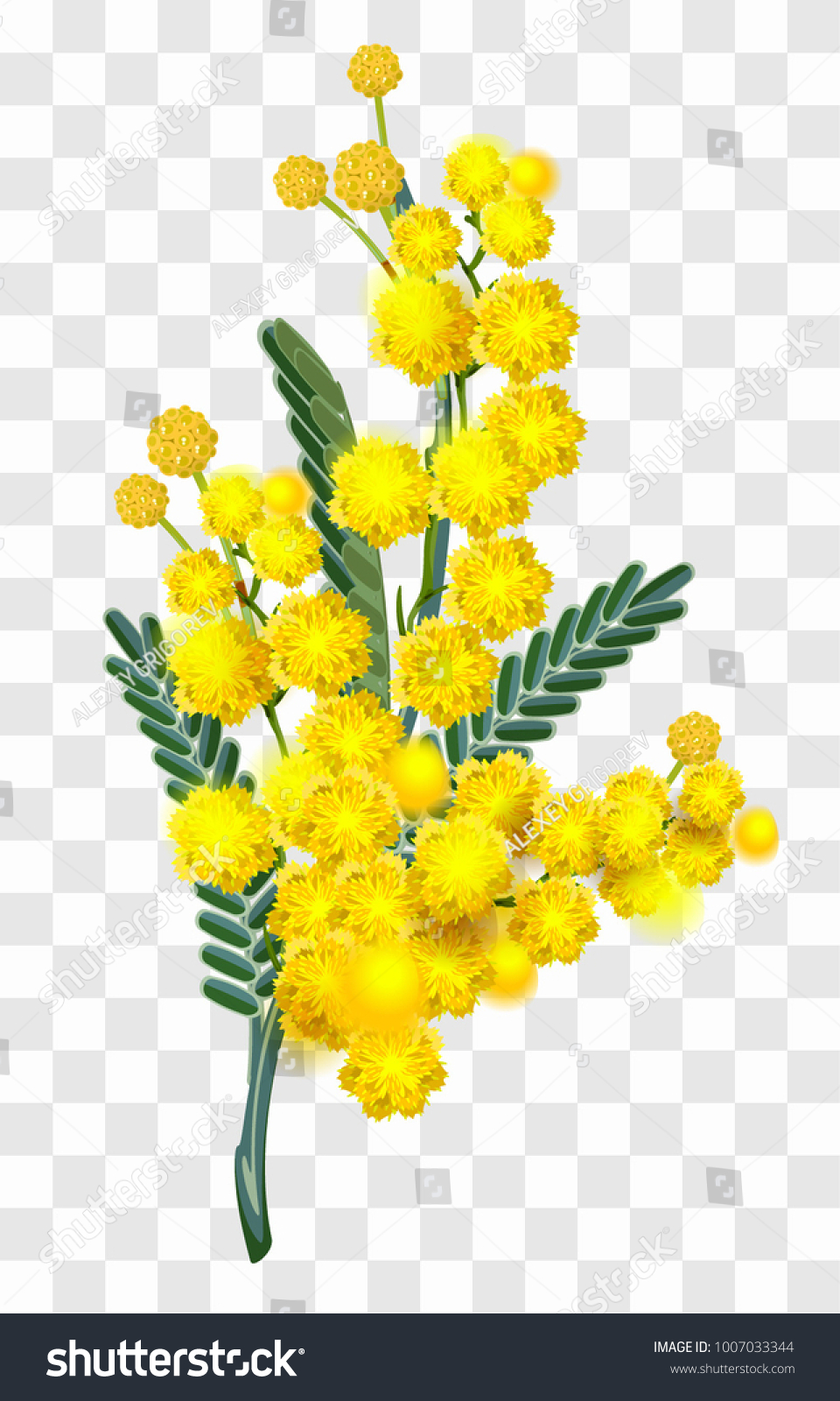 Yellow Mimosa Flower Branch Isolated On Stock Vector Royalty Free