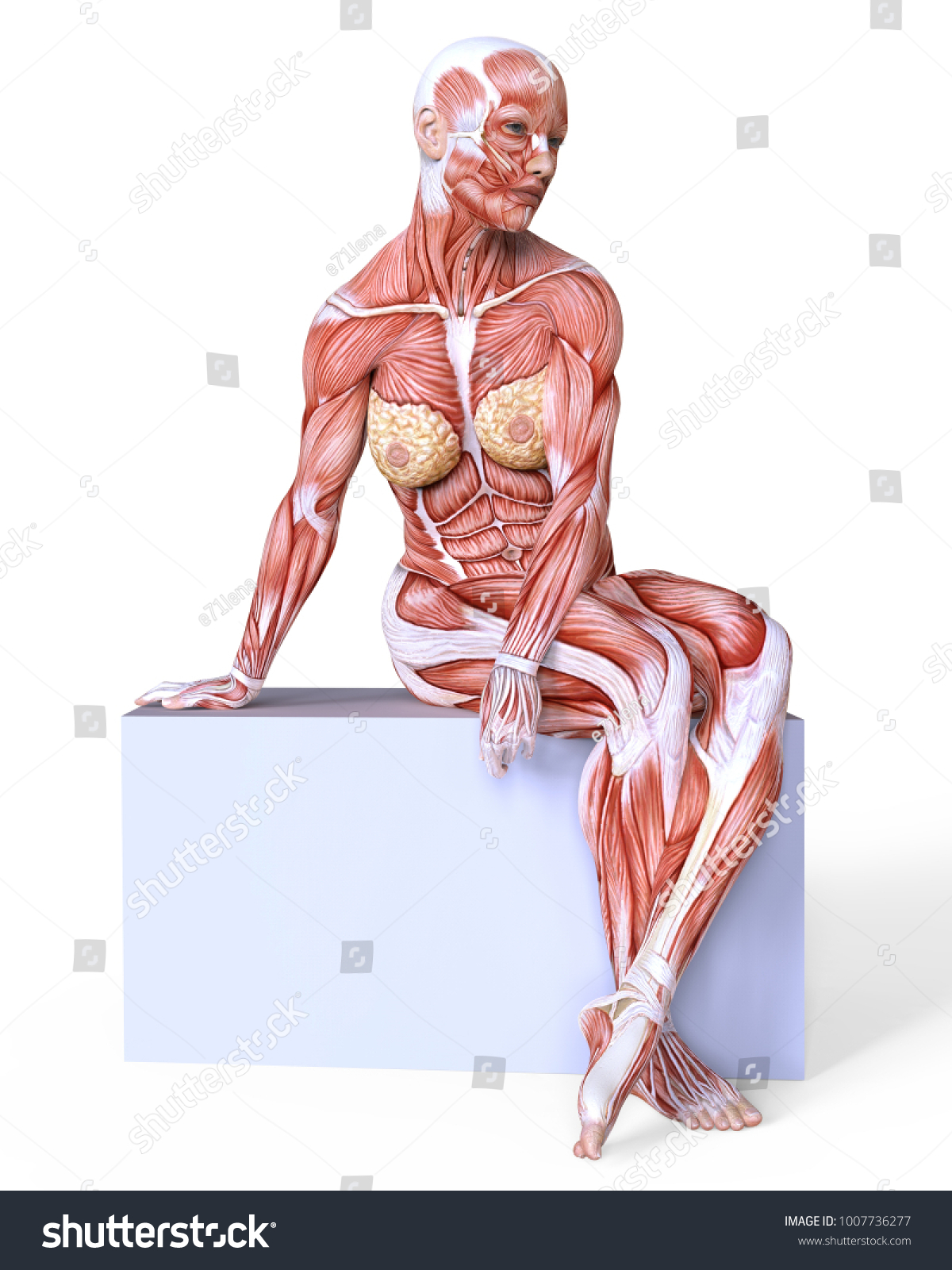 Female Body Without Skin Anatomy Muscles Stock Illustration