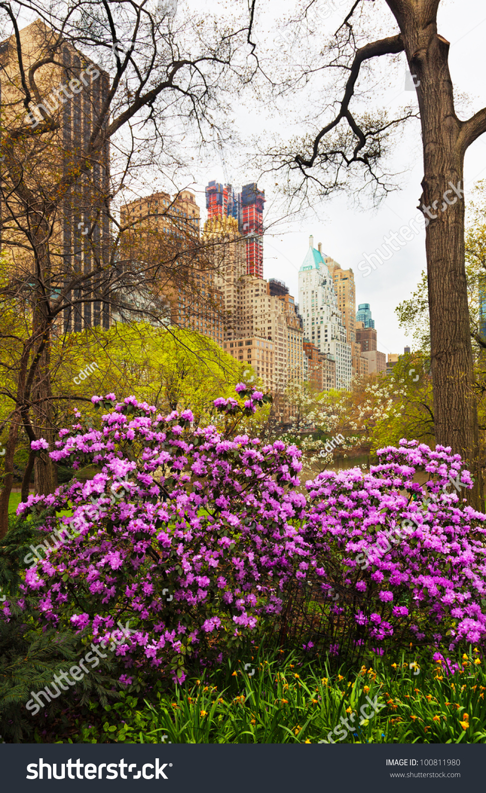 Spring Flowers Central Park New York Stock Photo Edit Now