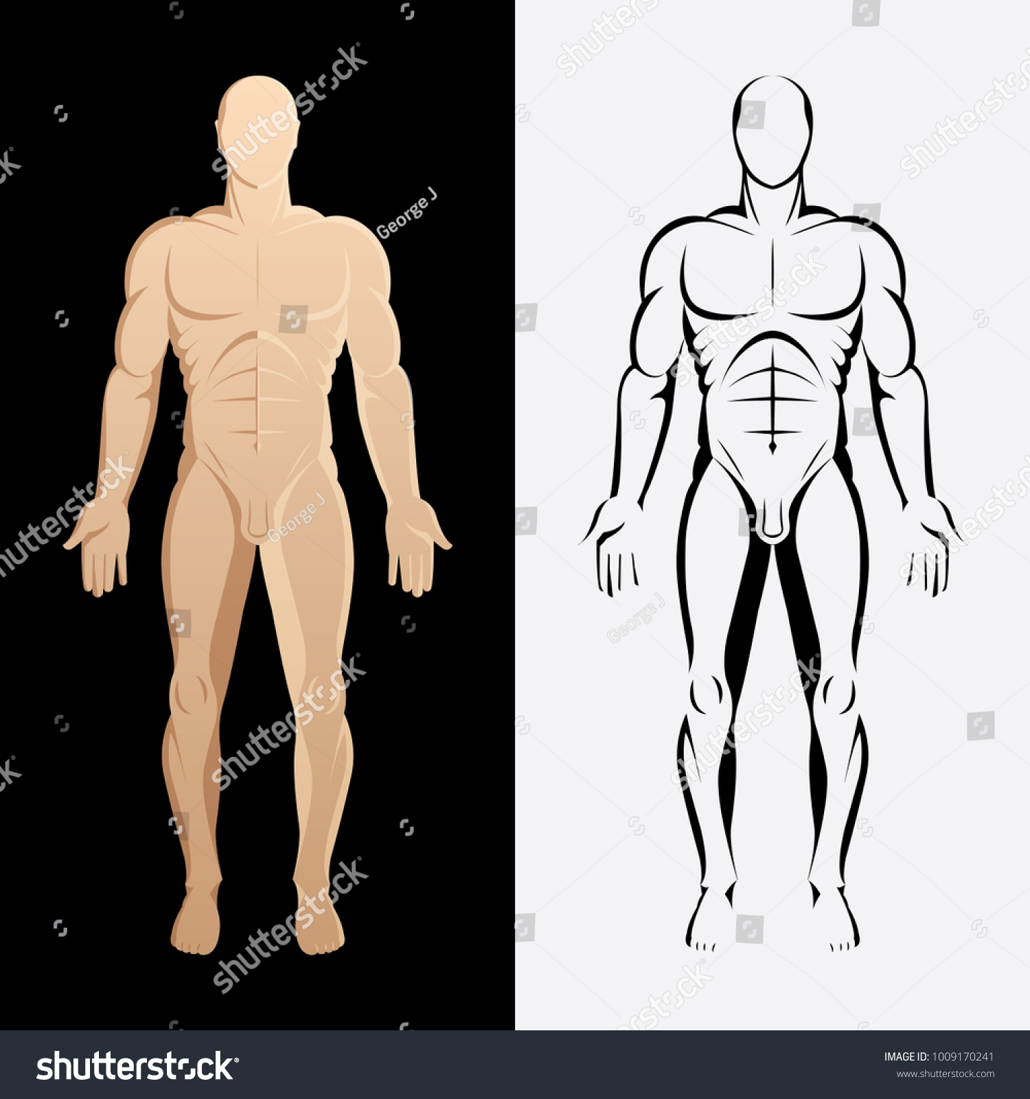 Human Body Anatomy Male Body Front Stock Vector 1009170241