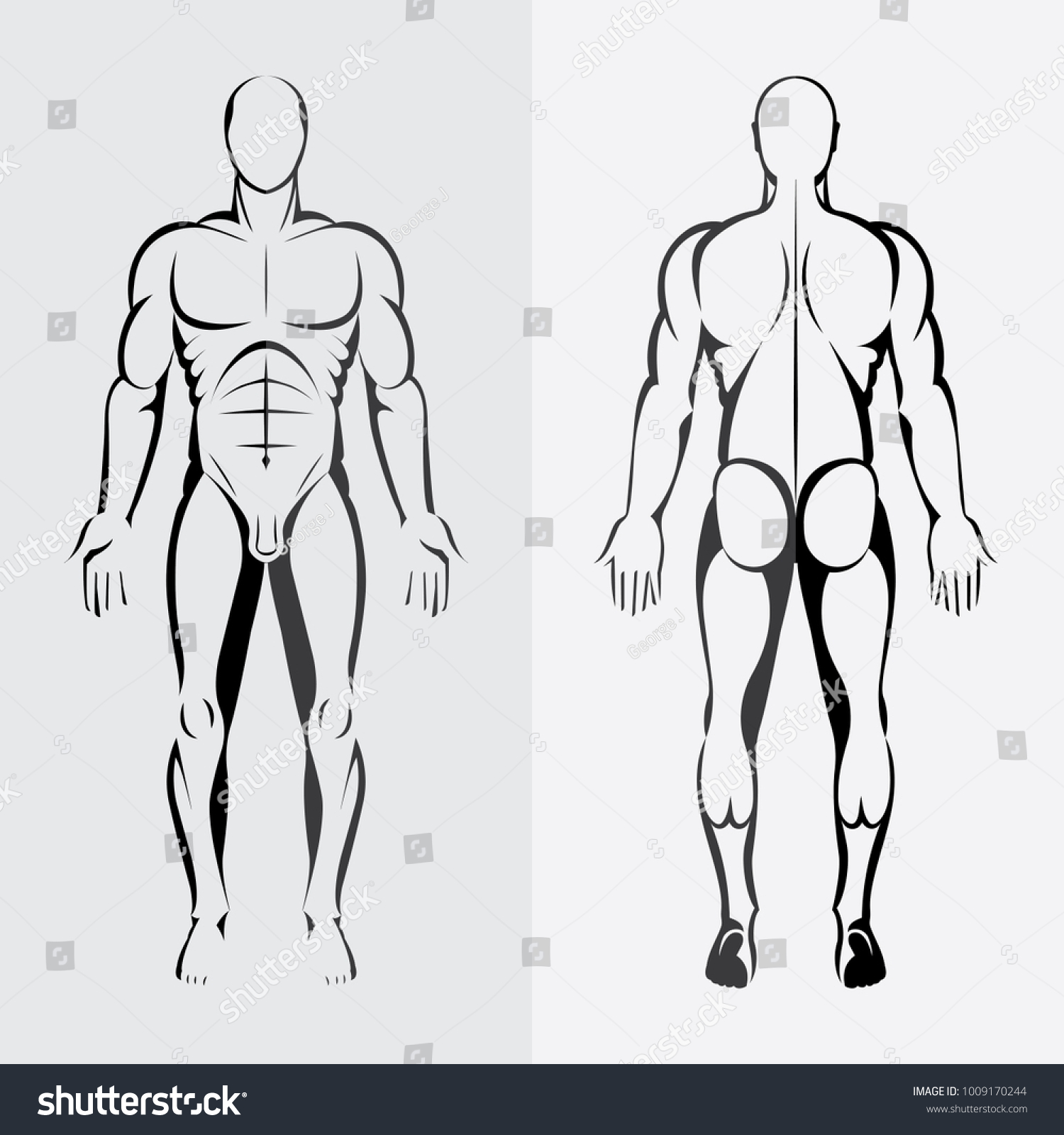 Human Body Anatomy Male Body Front Stock Vector Royalty Free