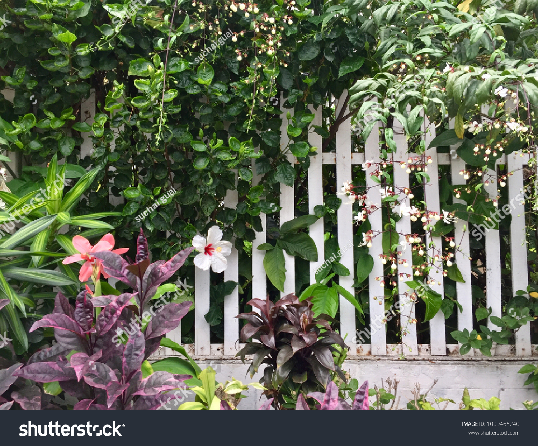 Flower Garden Along Fence Stock Photo Edit Now 1009465240