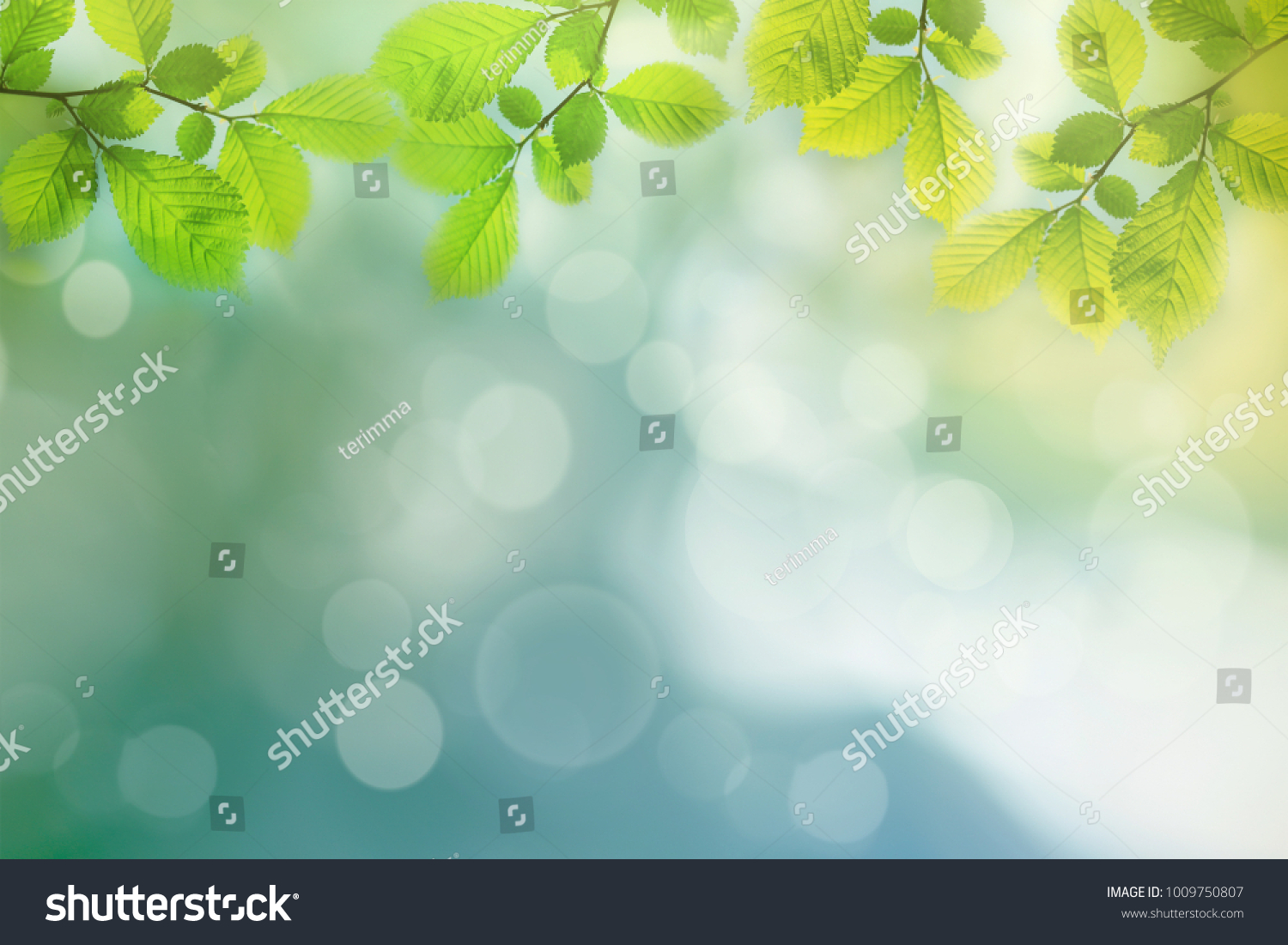 Spring background, green tree leaves on blurred background #1009750807