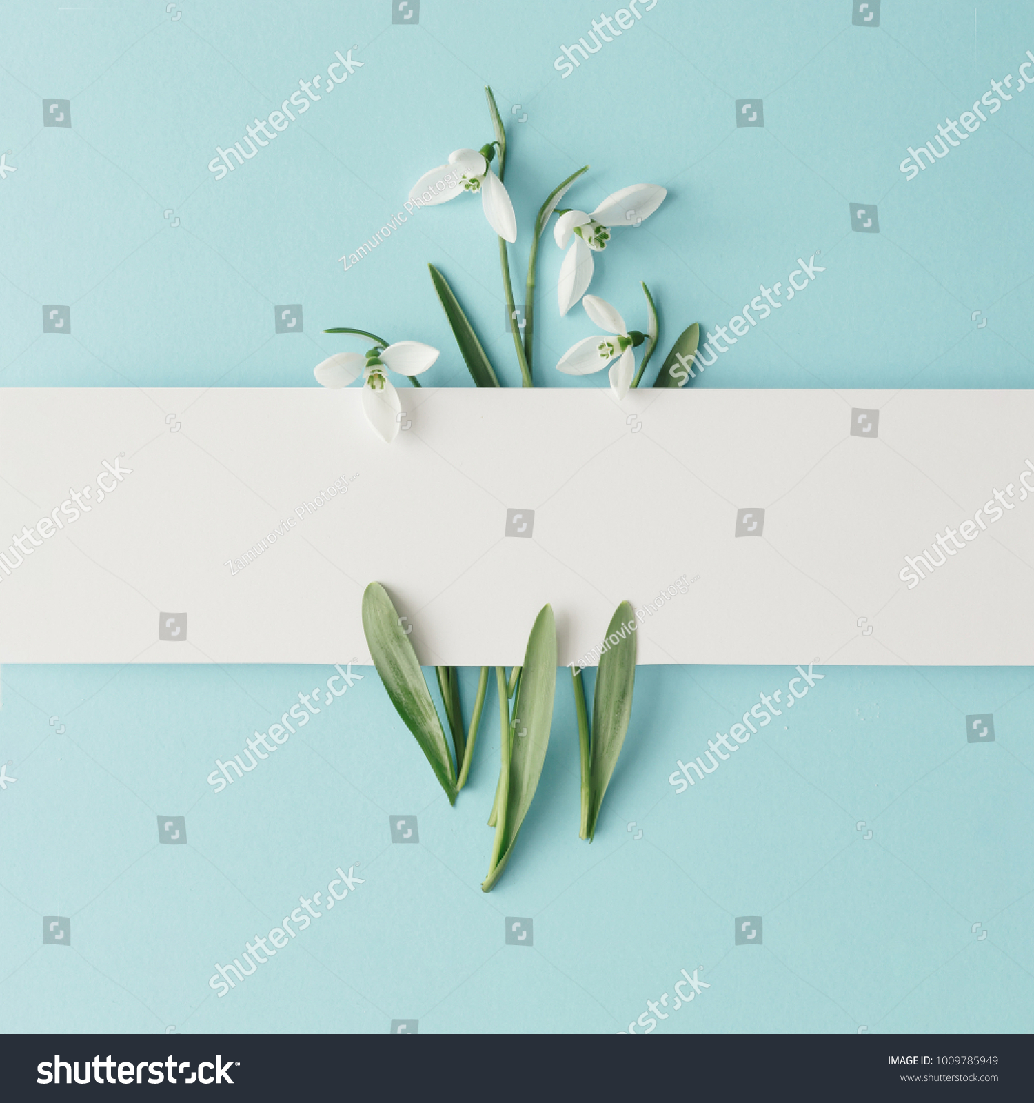 Creative layout made with snowdrop flowers on bright blue  background. Flat lay. Spring minimal concept. #1009785949