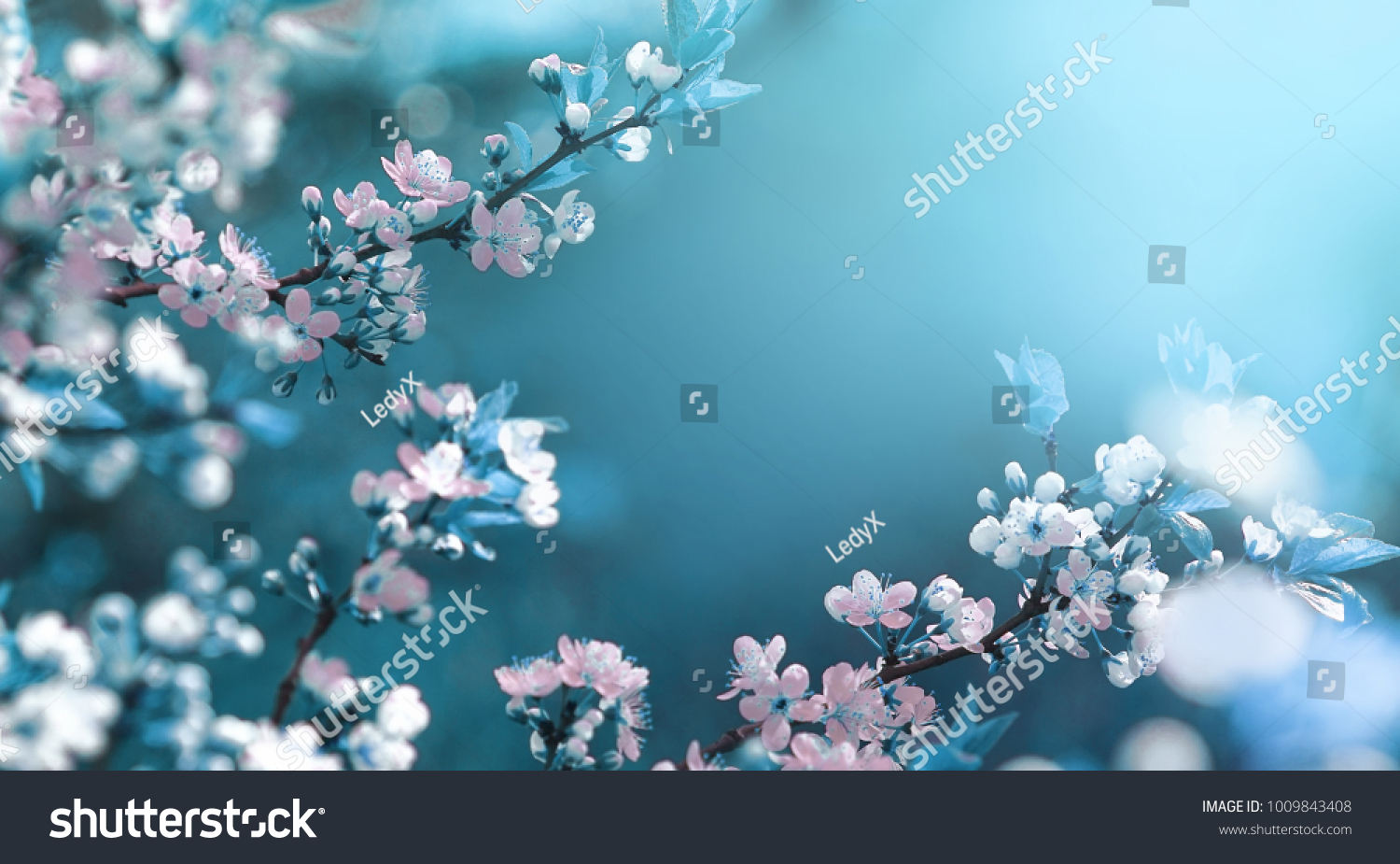 Beautiful floral spring abstract background of nature. Branches of blossoming apricot macro with soft focus on gentle light blue sky background. For easter and spring greeting cards with copy space #1009843408
