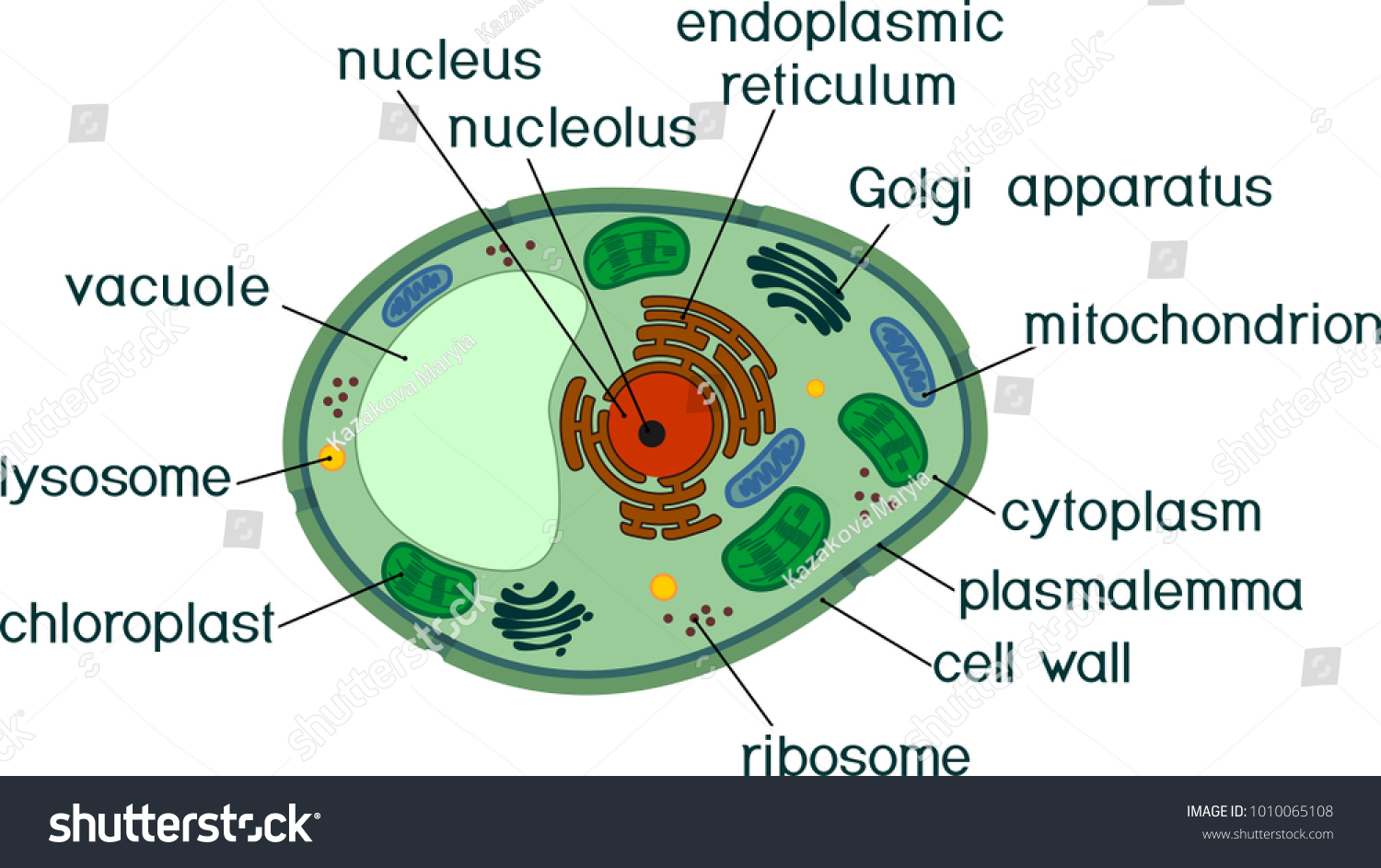 Enjoyable Plant Cell Structure Titles Stock Vector Royalty Free 1010065108 Wiring Digital Resources Remcakbiperorg