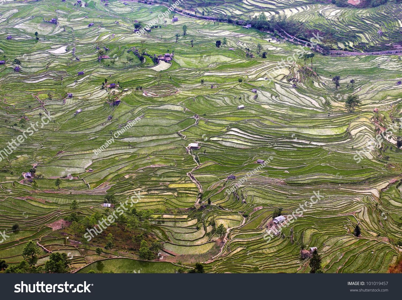 terraced rice fields yuan yang yunnan stock photo 101019457
