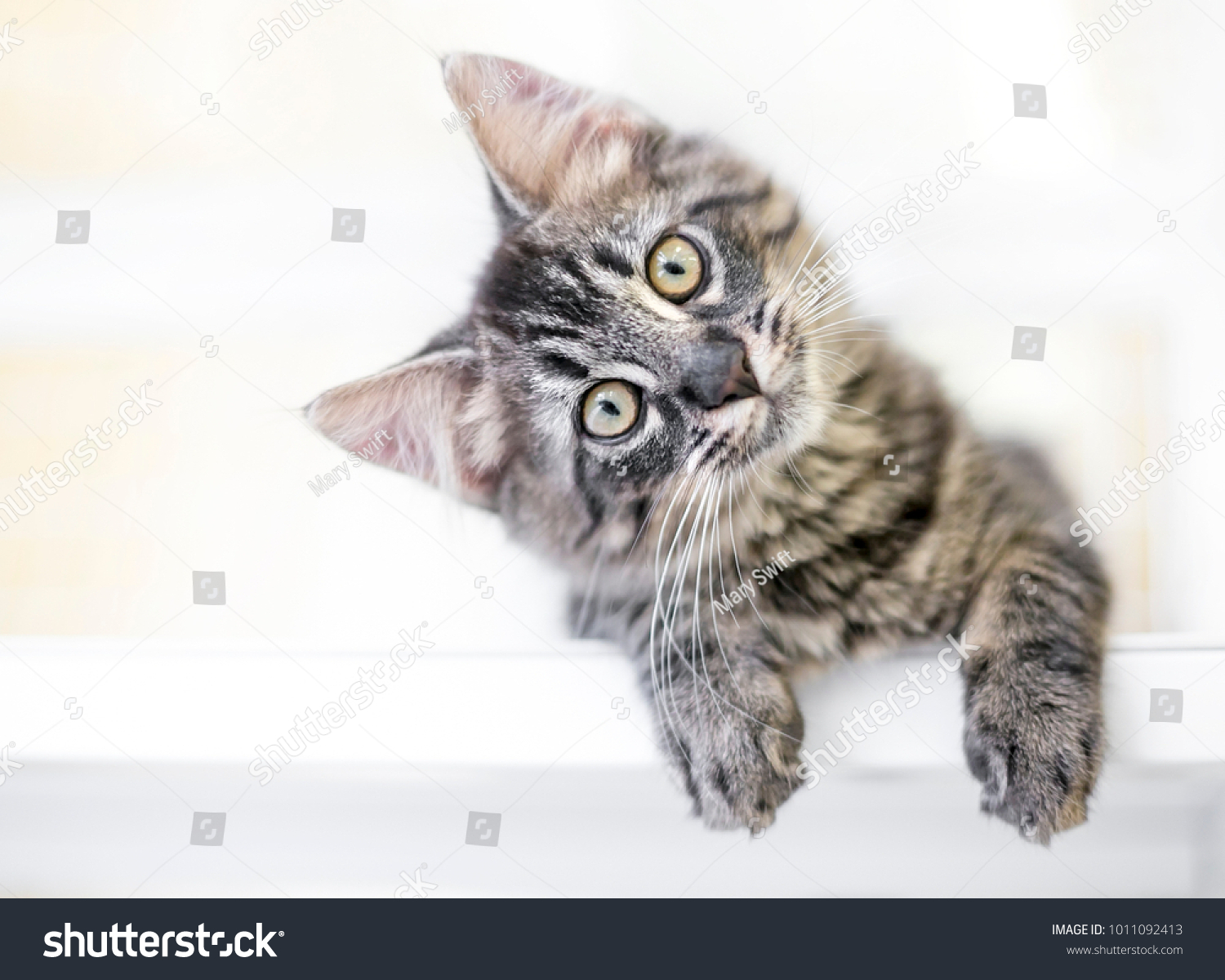 A young kitten gazing at the viewer curiously with a head tilt #1011092413