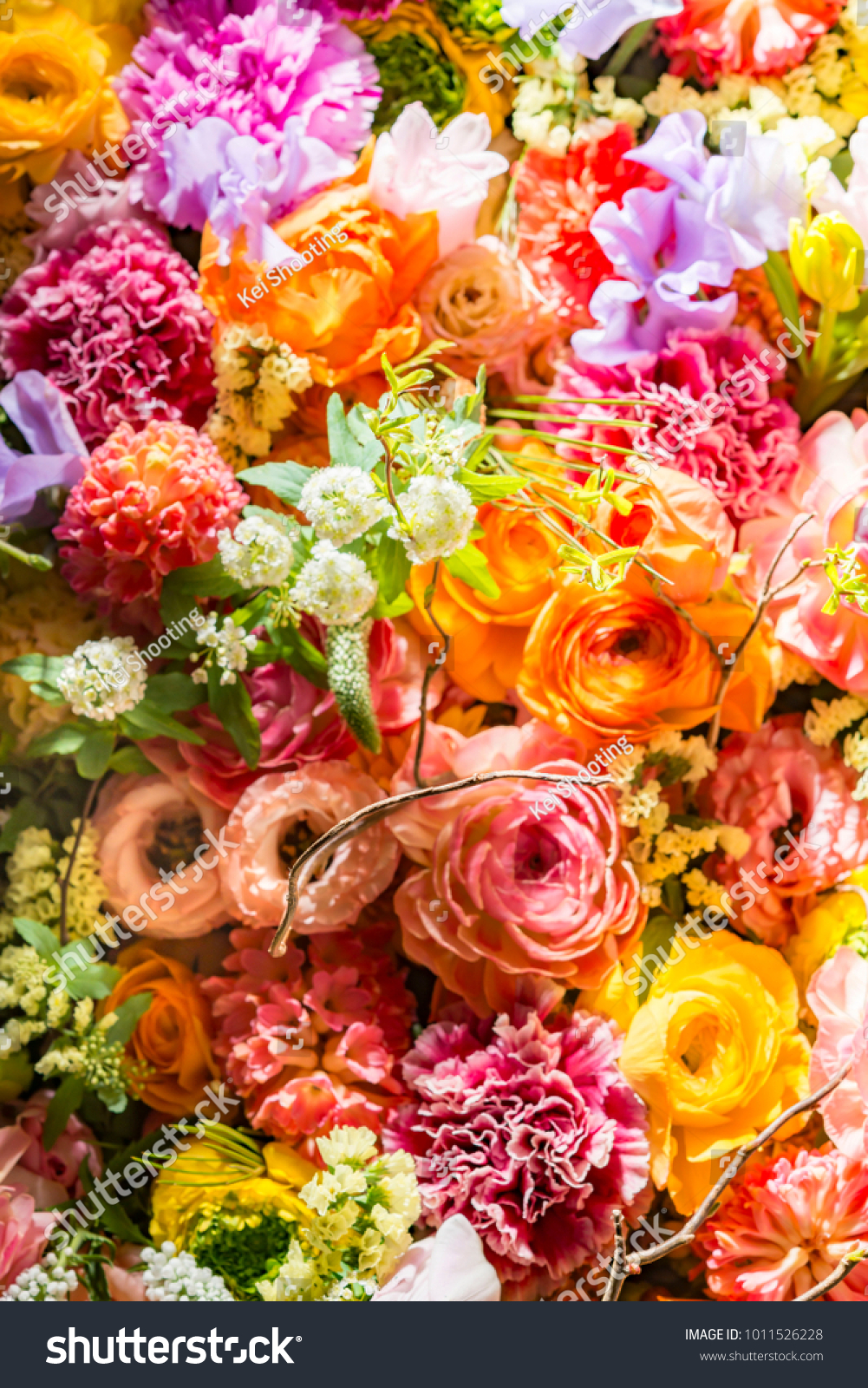 Colorful Beautiful Flower Wall Stock Photo Edit Now 1011526228