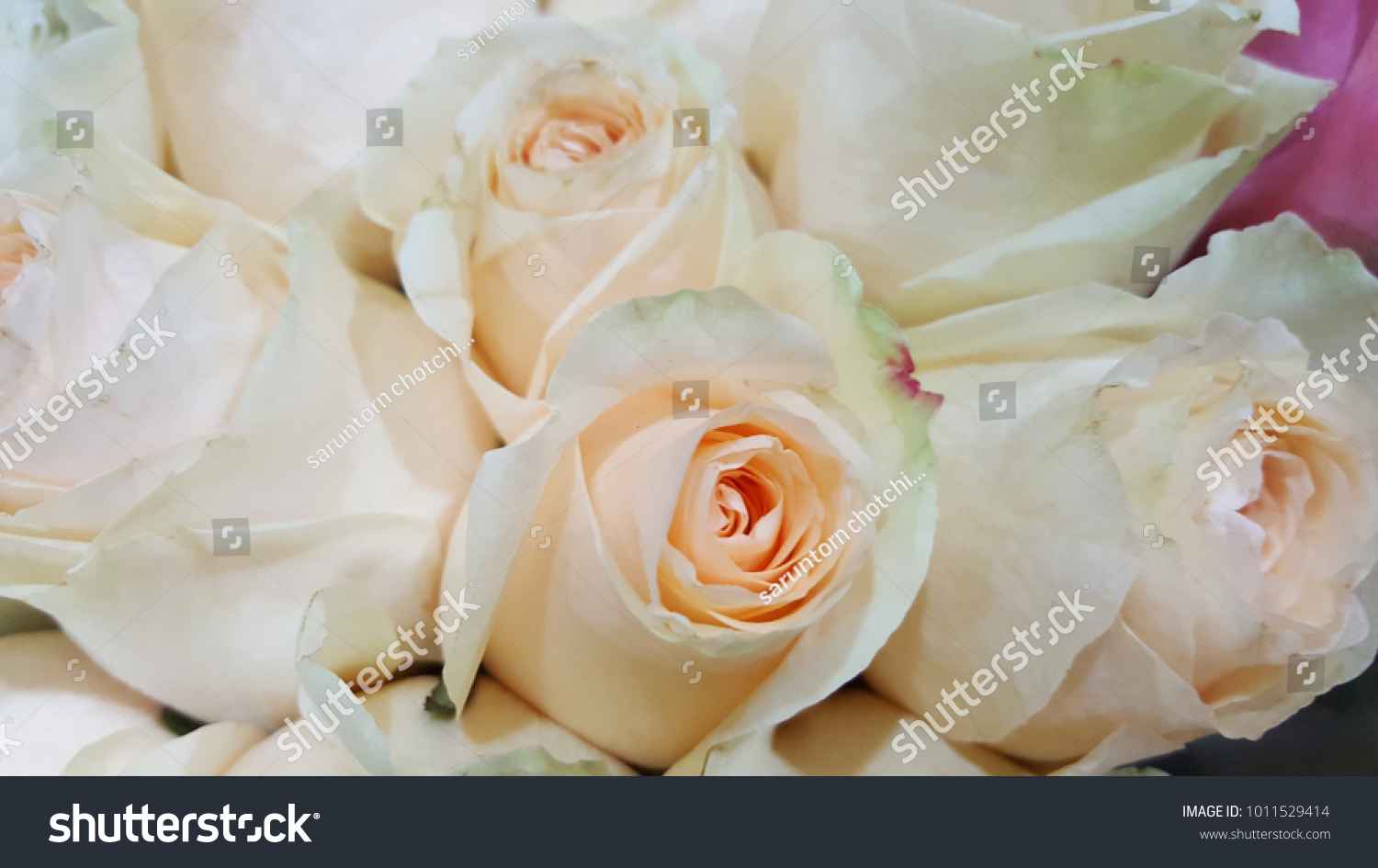 A Heap Of Beautiful Bright Light Pink Roses Flower Bouquet For