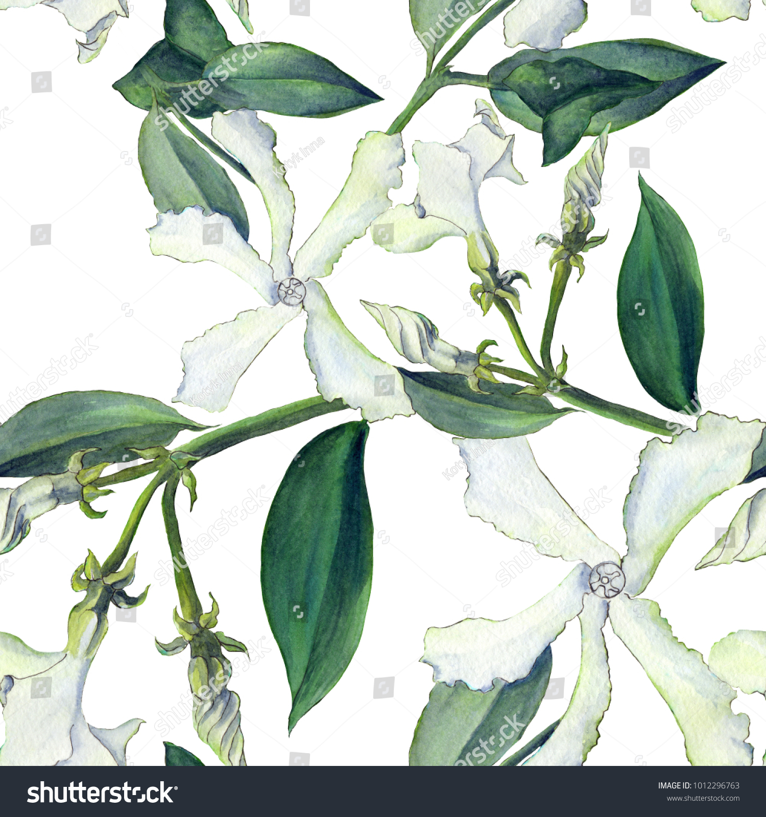 Royalty Free Stock Illustration Of Jasmine Flowers Buds Leaves