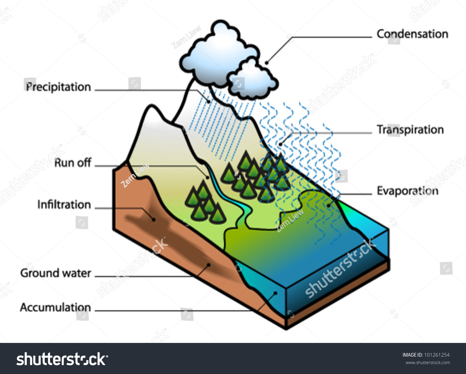 The water cycle showing evaporation, transpiration, condensation ...