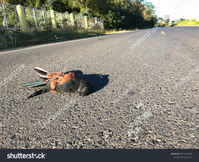 Wild Animals Killed On Asphalt Road Stock Photo (Download Now ...