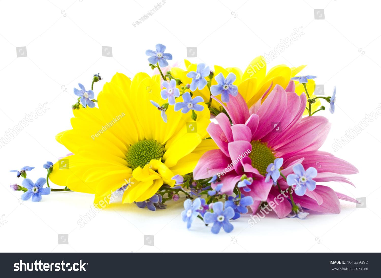 Beautiful Bright Flowers Chrysanthemum On White Stock Photo Edit