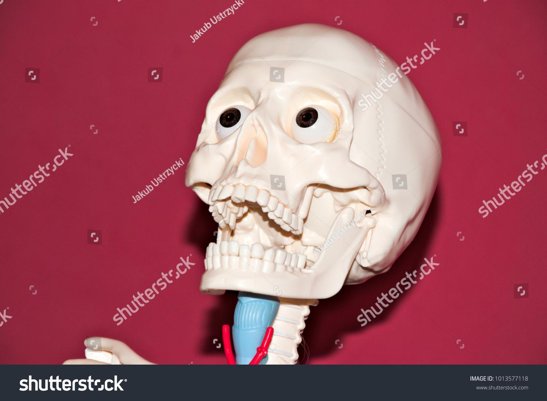 Anatomical Model Human Skeleton Screaming Up Stock Photo Edit Now