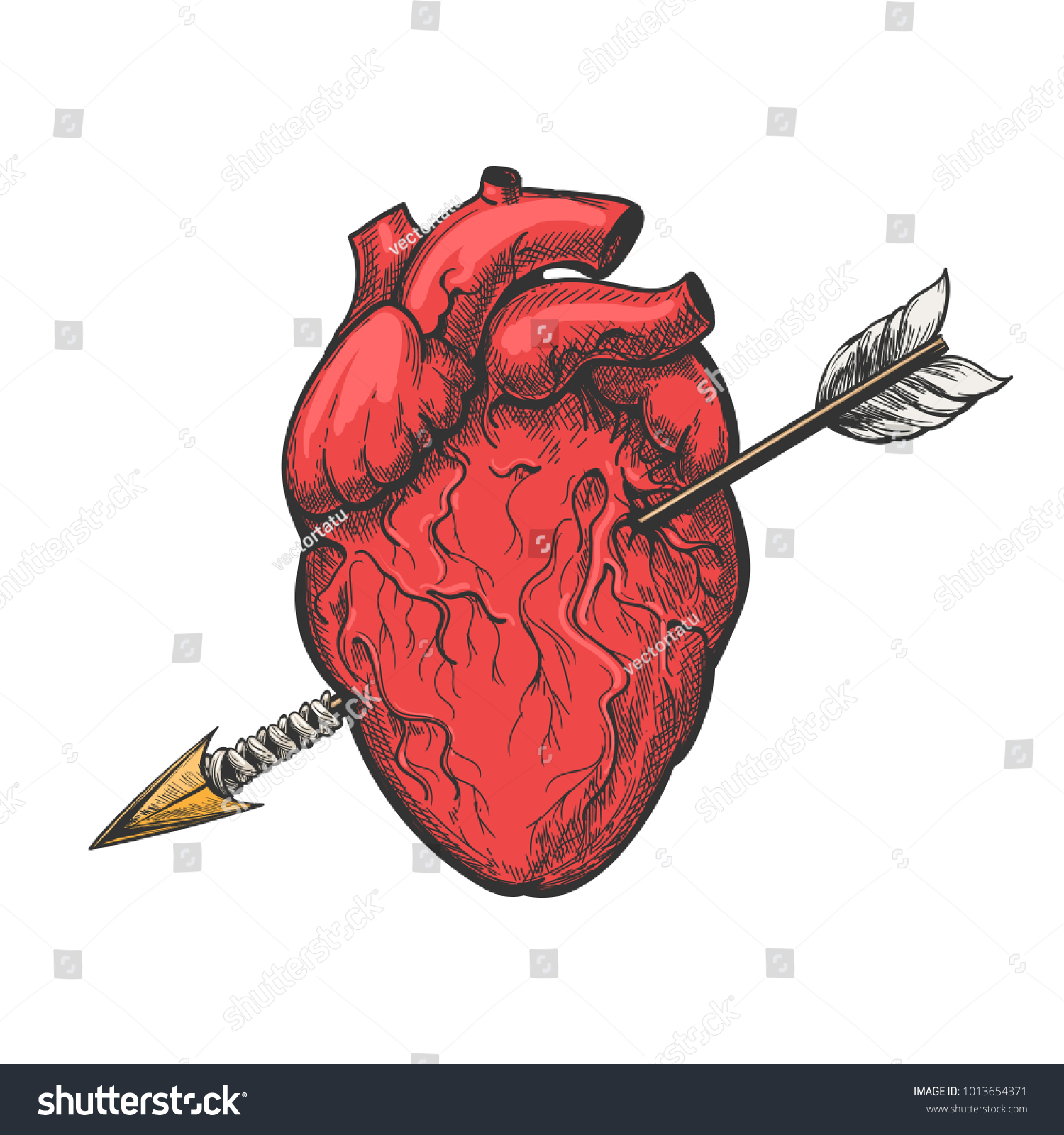 Human Heart Arrow Drawing Real Vector Stock Vector 1013654371 ...