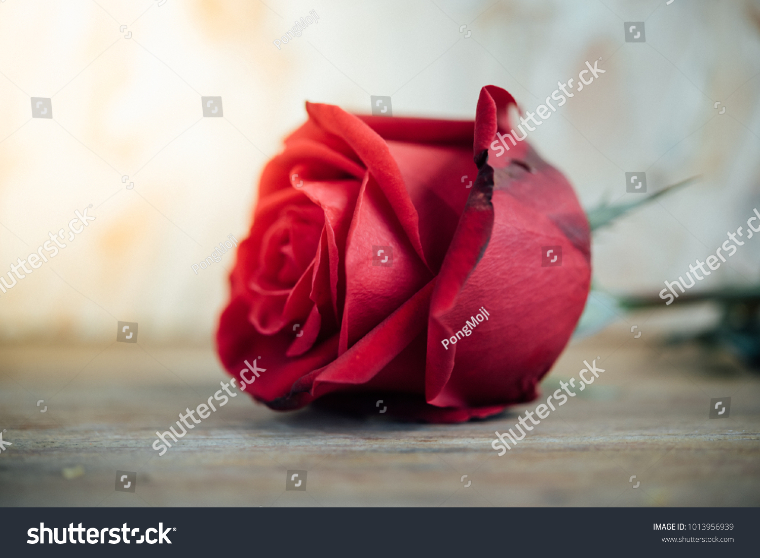 Red rose flower nature beautiful flowers stock photo download now red rose flower nature beautiful flowers from the garden for valentines on wooden floor with copy izmirmasajfo