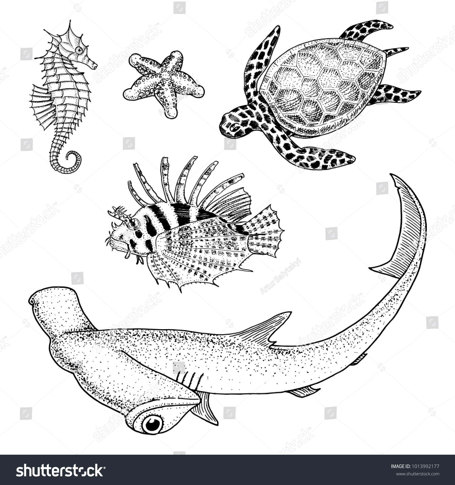 sea creature or Fishes cheloniidae or green turtle and seahorse. red ...