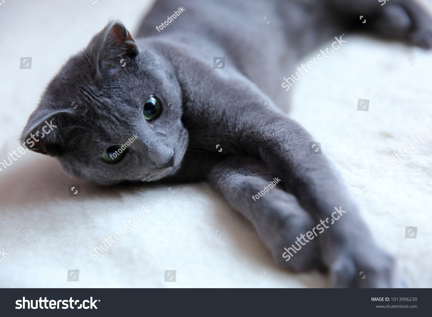 Domestic Cats Great Pets Cuddle Hug Stock Photo Edit Now 1013996230