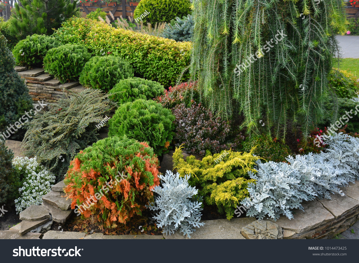 Flowerbed Decorative Trees Bushes Flowers Summer Stock Photo ...