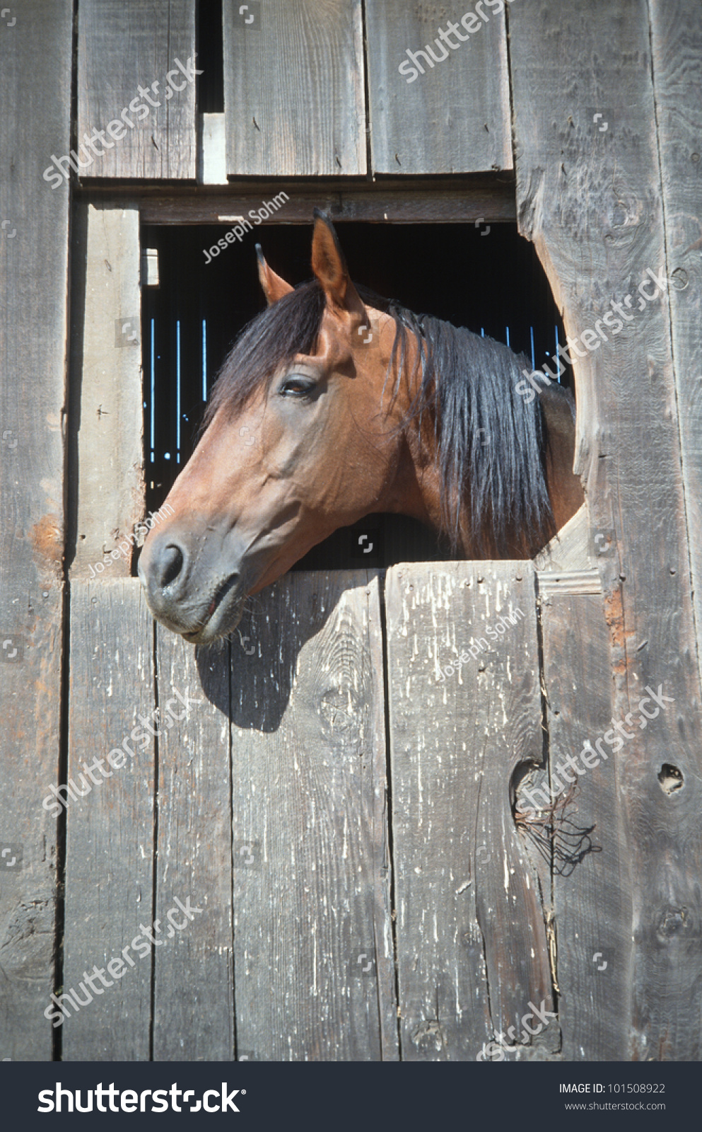 Horse in barn window northern california stock photo for Window horses
