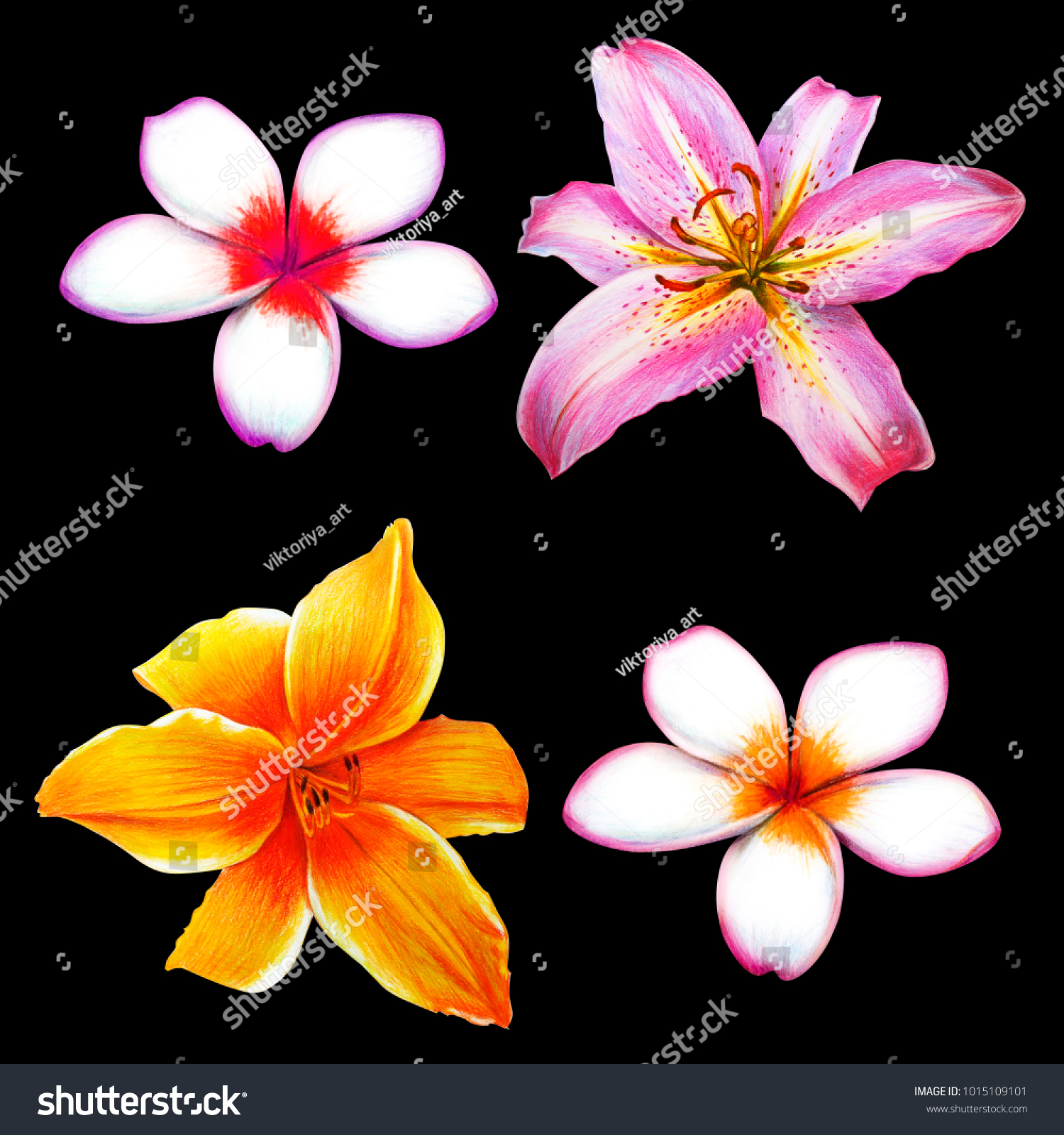 Large tropical lilies small flowers stock illustration 1015109101 large tropical lilies and small flowers izmirmasajfo Images