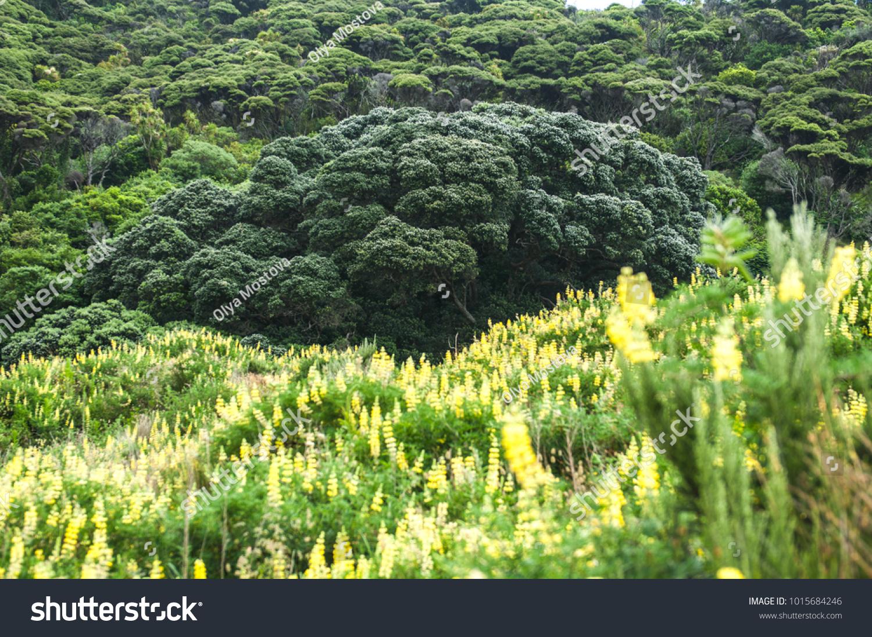 Big Green Broccoli Tree Yellow Flowers Stock Photo Edit Now