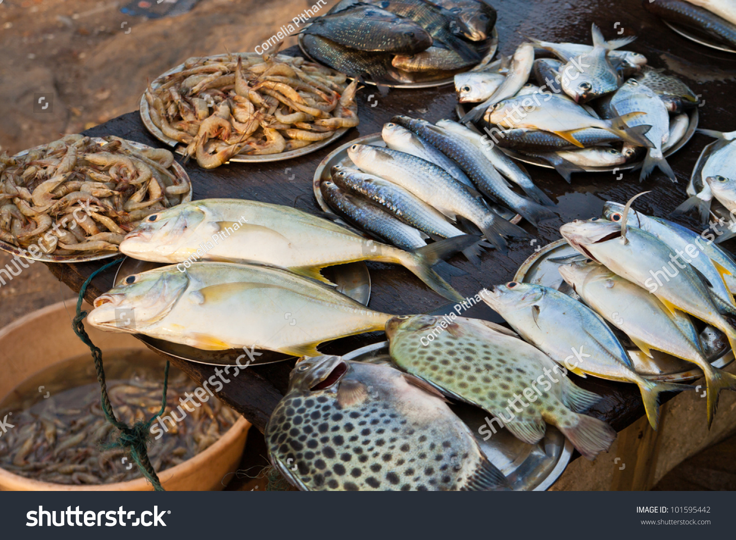 Freshwater fish kerala - Fish Market In Kerala India