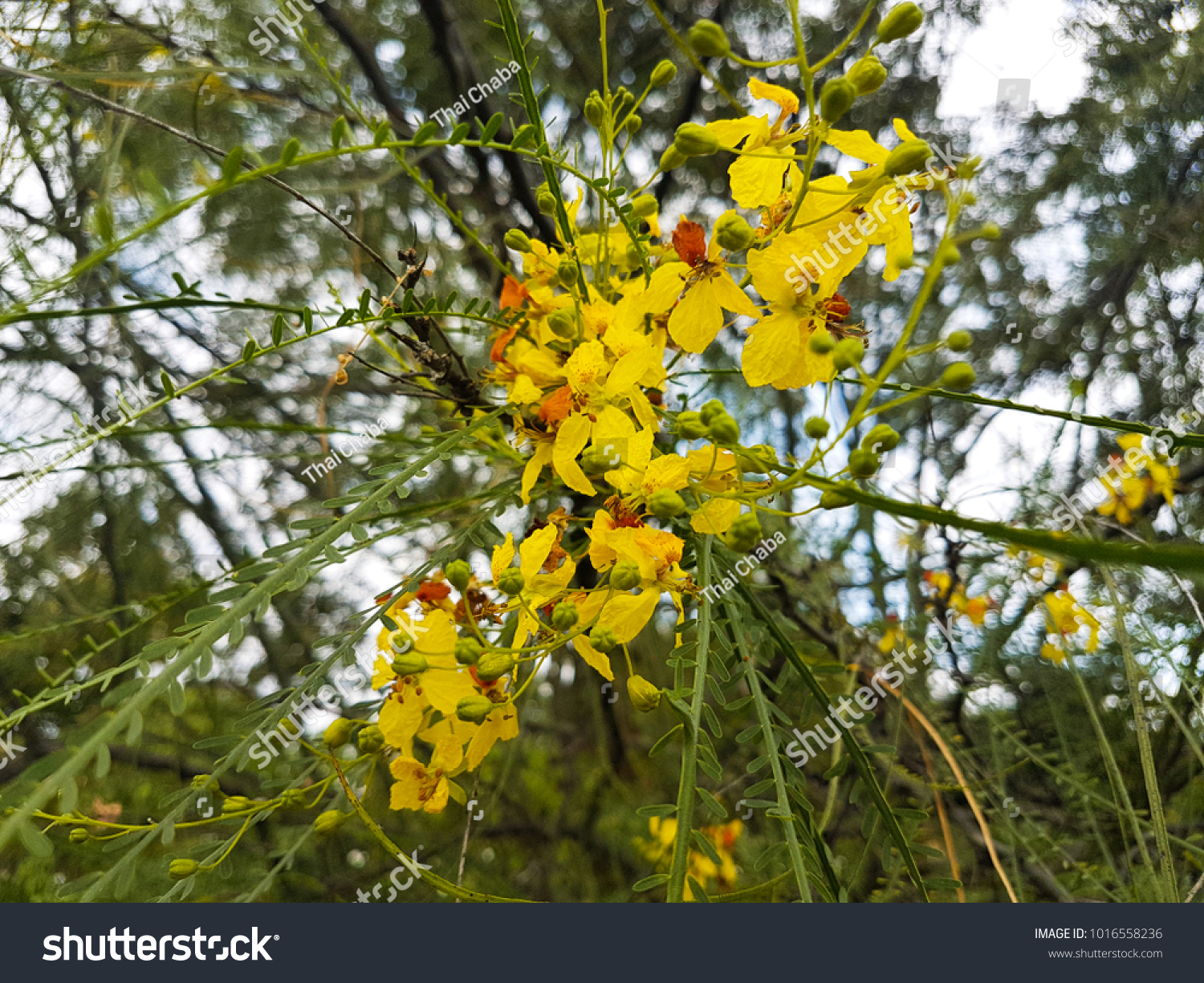 Small Yellow Flowers With Light Blue And Light Pink On The Near