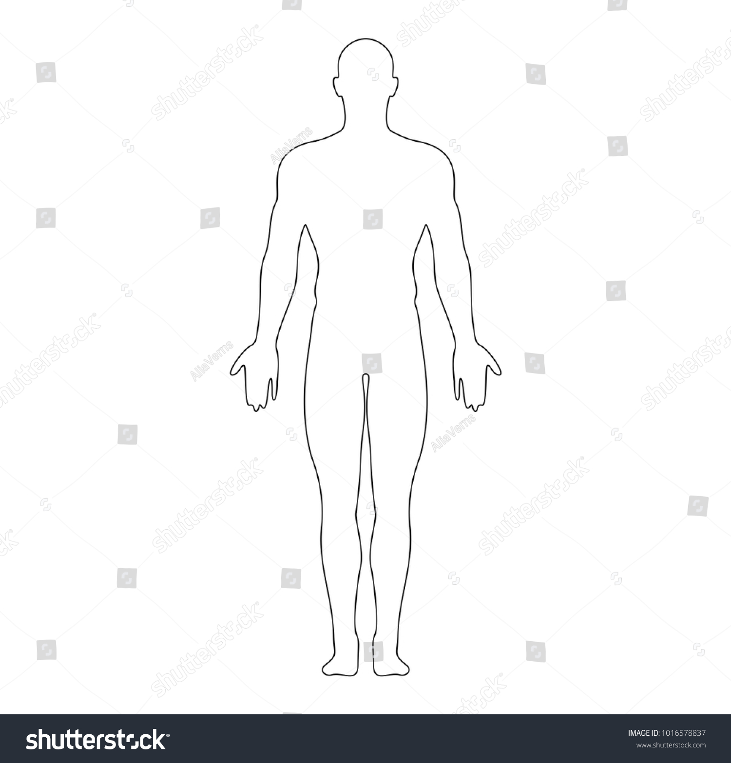 Anatomical Position Anterior View Male Body Stock Vector 1016578837