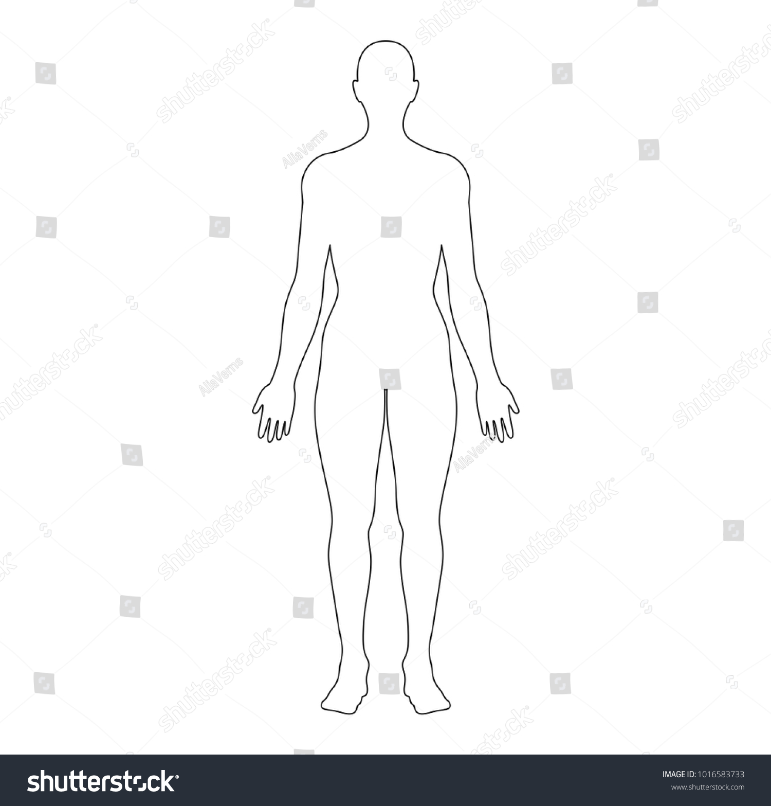 Anatomical Position Anterior View Female Body Stock Vector (Royalty ...