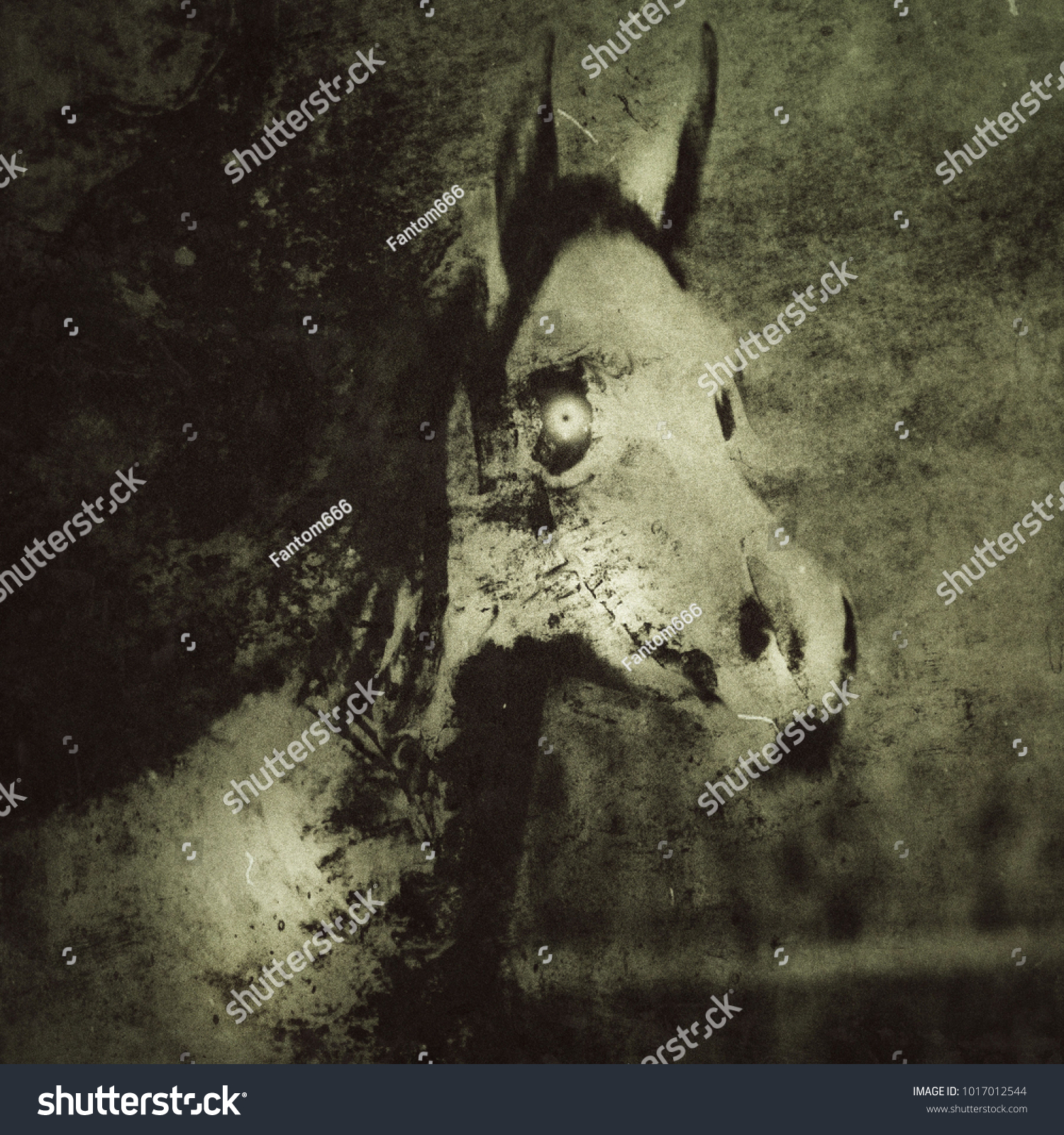 Horse Skull Spooky Horror Wallpaper Scary 1017012544