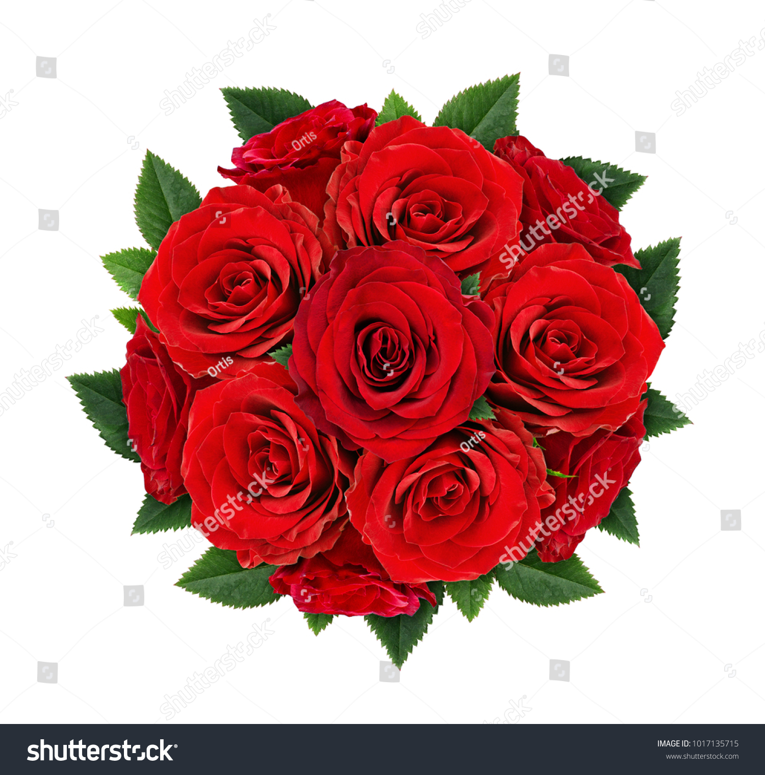 Red Rose Flowers Round Bouquet Isolated Stock Photo Edit Now