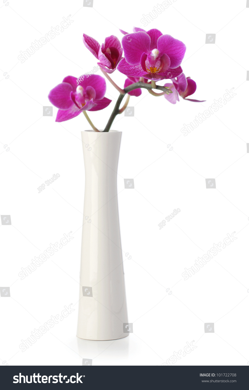 Pink Orchid Flower White Vase Isolated Stock Photo Edit Now