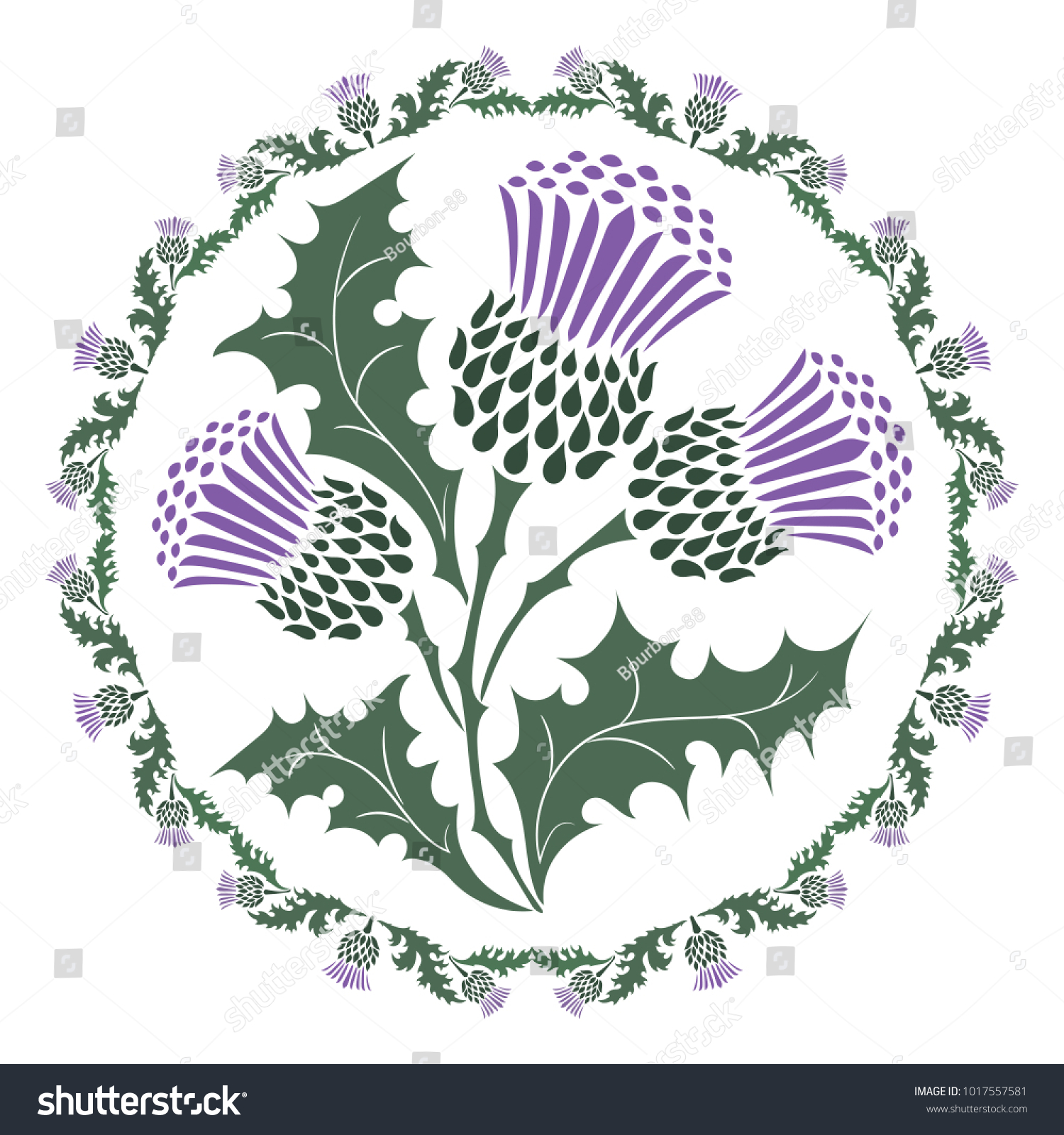 Thistle flower ornament round leaf thistle stock vector 1017557581 thistle flower and ornament round leaf thistle the symbol of scotland isolated on white buycottarizona Image collections