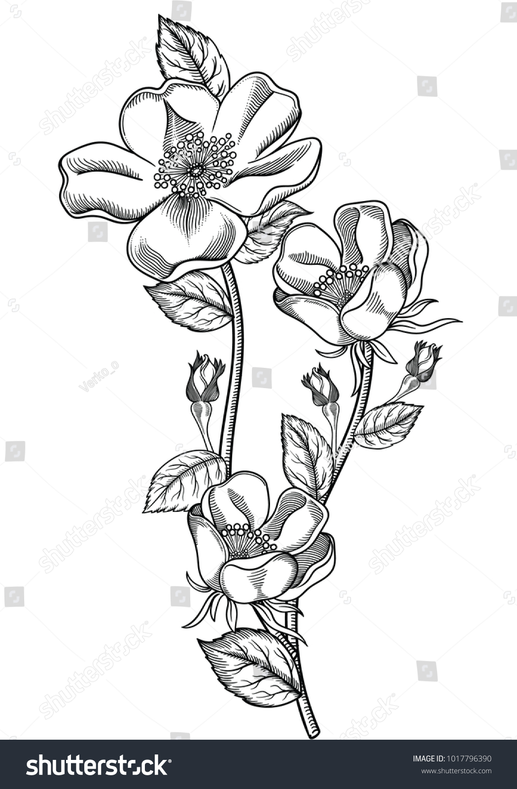 Flower Sketch Orchids Bouquet Hand Drawing By Pencil Ez Canvas
