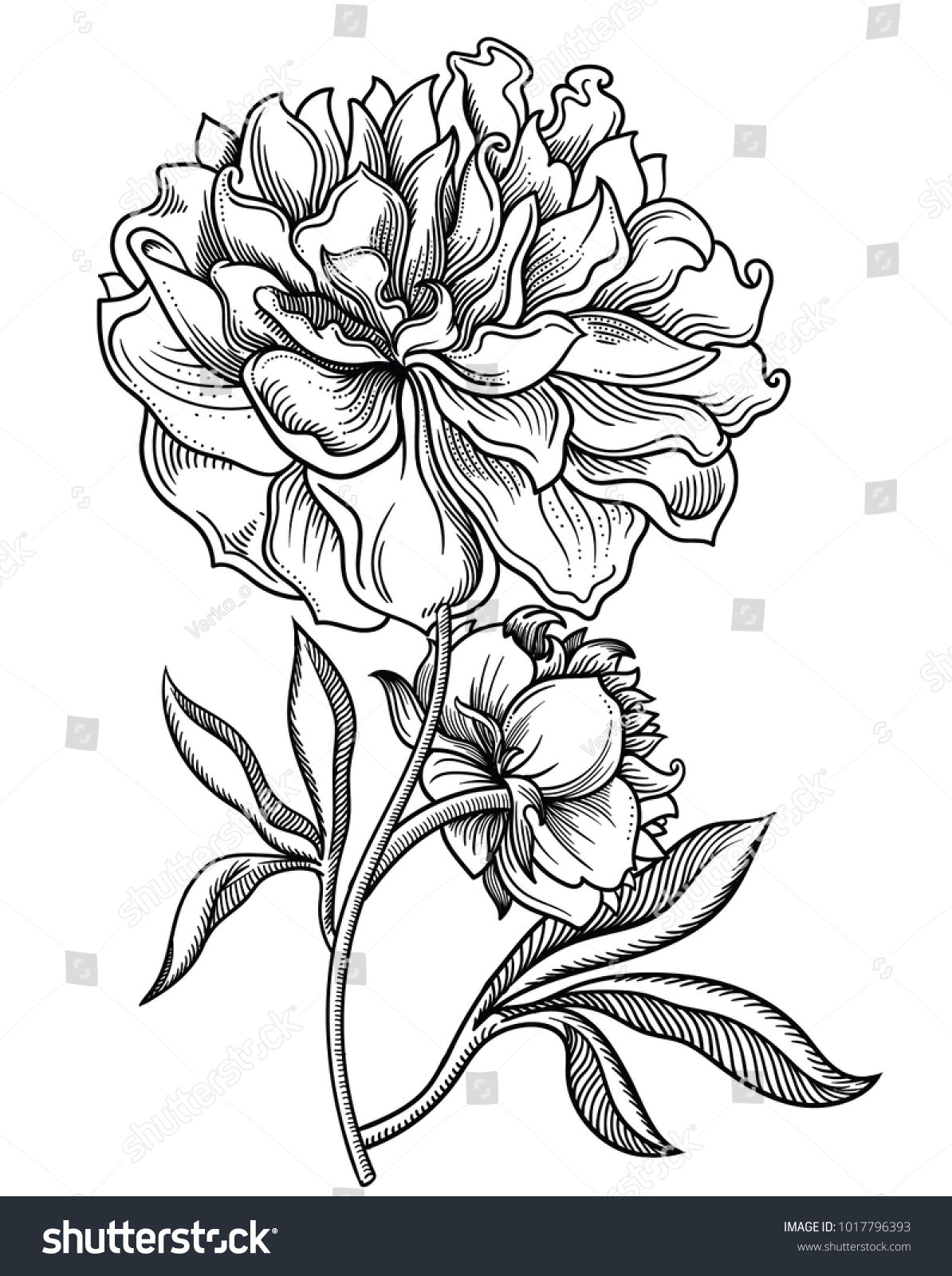Blooming Forest Flowers Detailed Hand Drawn Vector Illustration